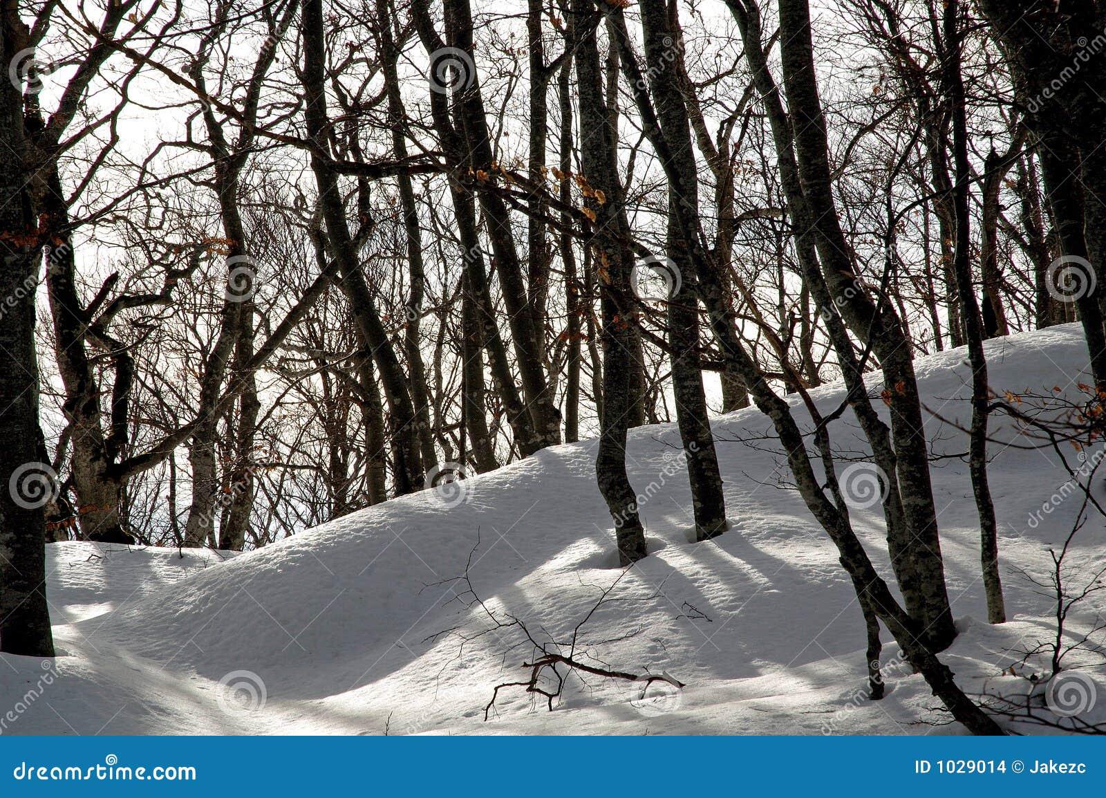 καλυμμένο fundergrowth χιόνι