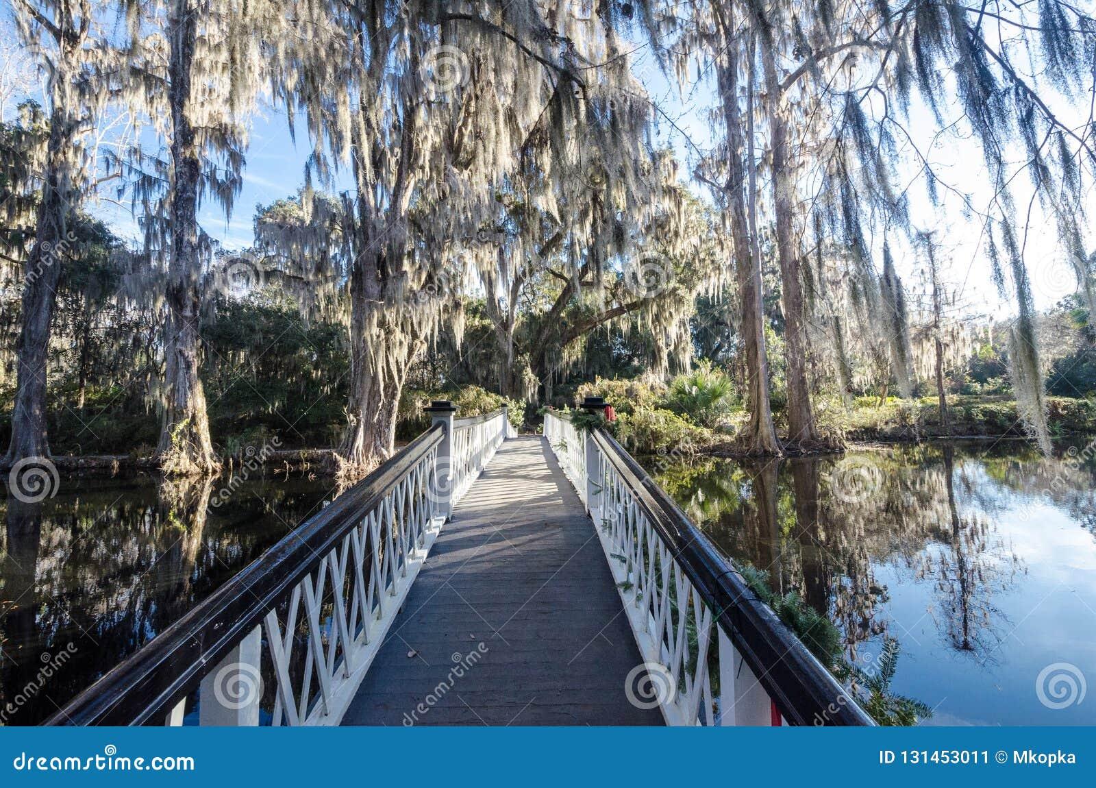 Καλός θόλος των ζωντανών δέντρων βαλανιδιών με τη φτέρη αναζοωγόνησης σε μια γέφυρα