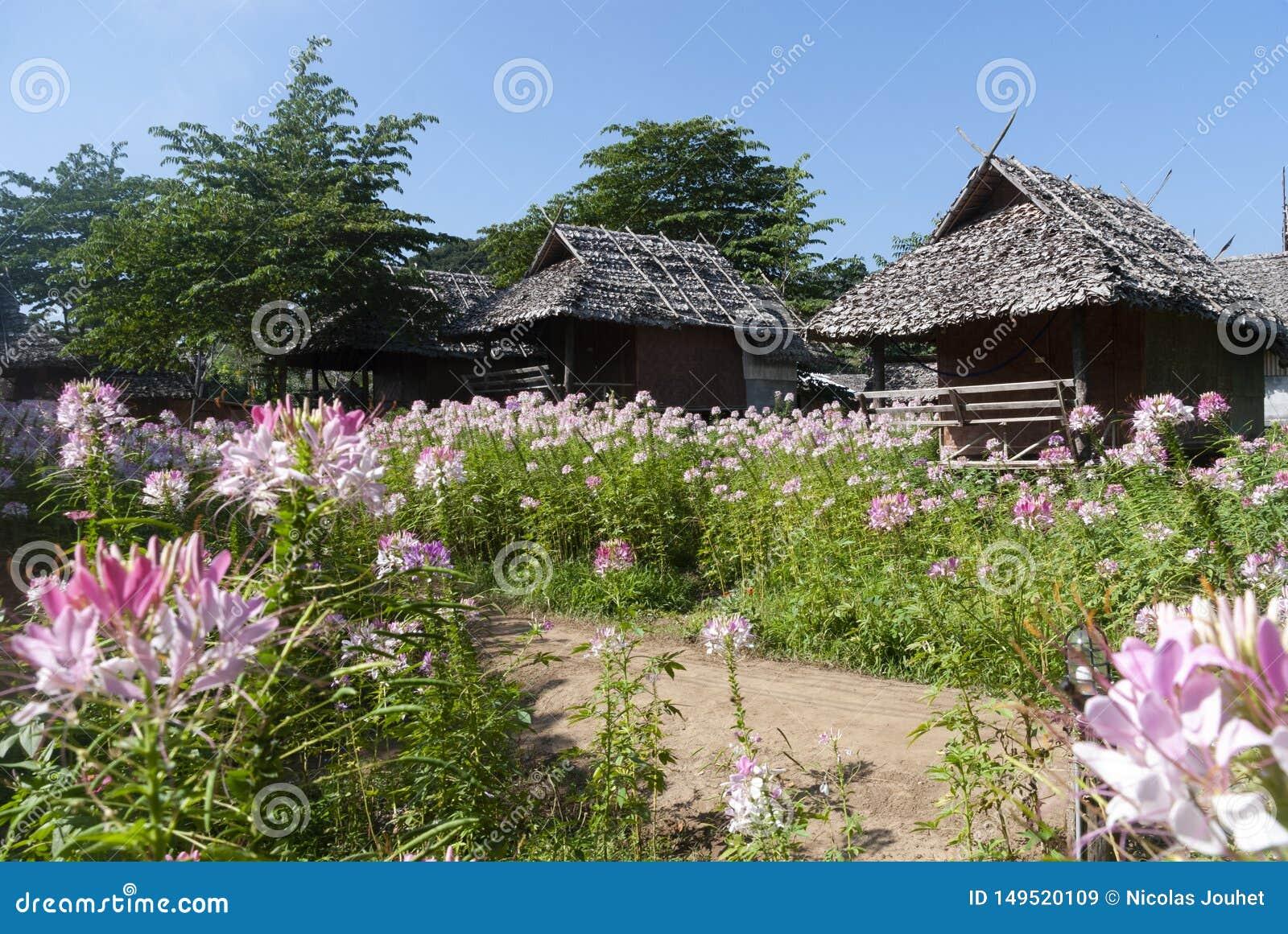 Καλύβα μπαμπού με τα λουλούδια στη βόρεια Ταϊλάνδη