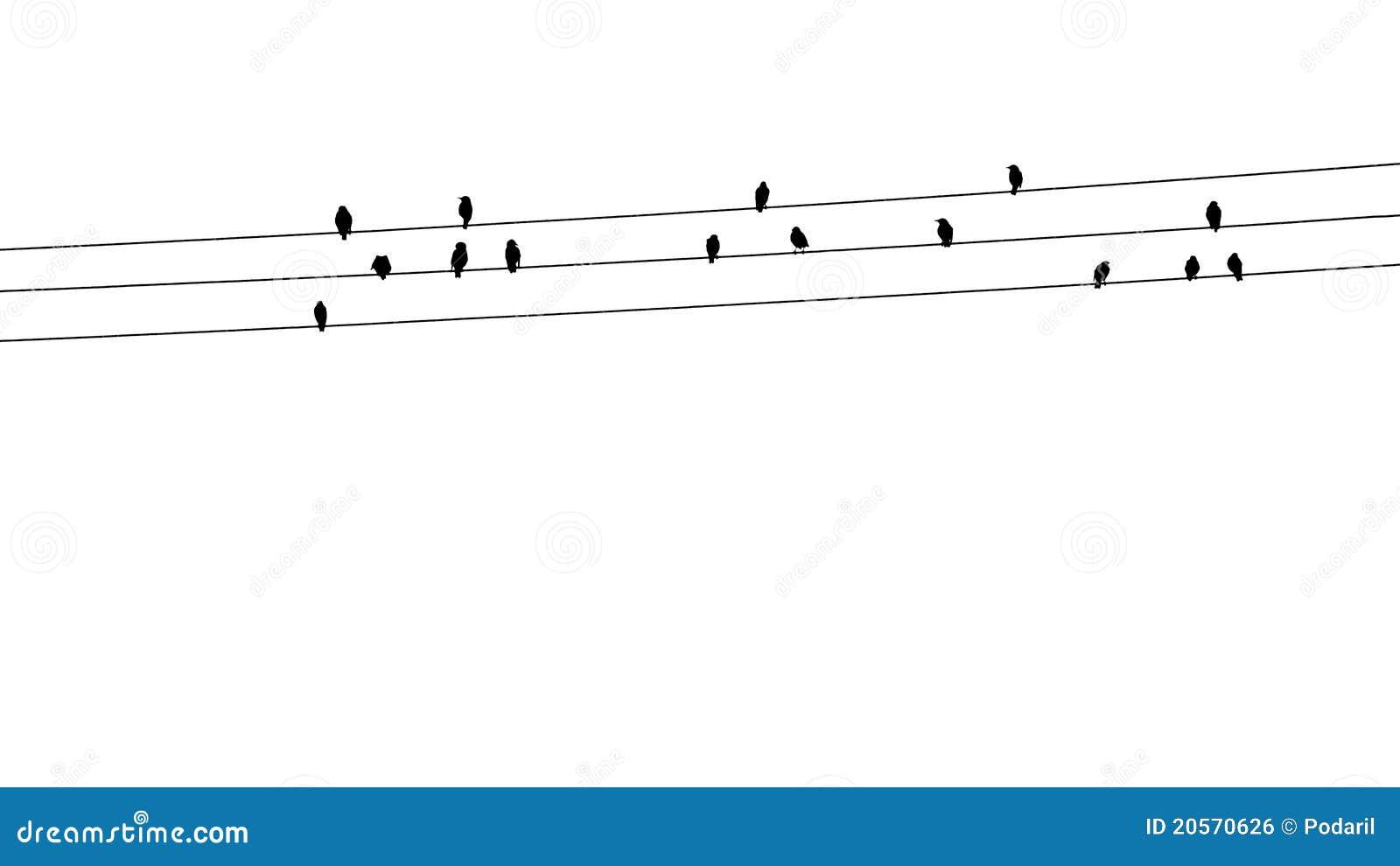 καλώδια πουλιών