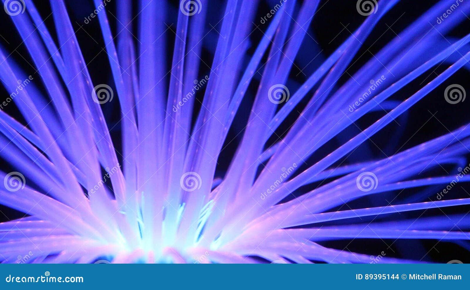 Καμμένος μπλε κοραλλιογενής ύφαλος