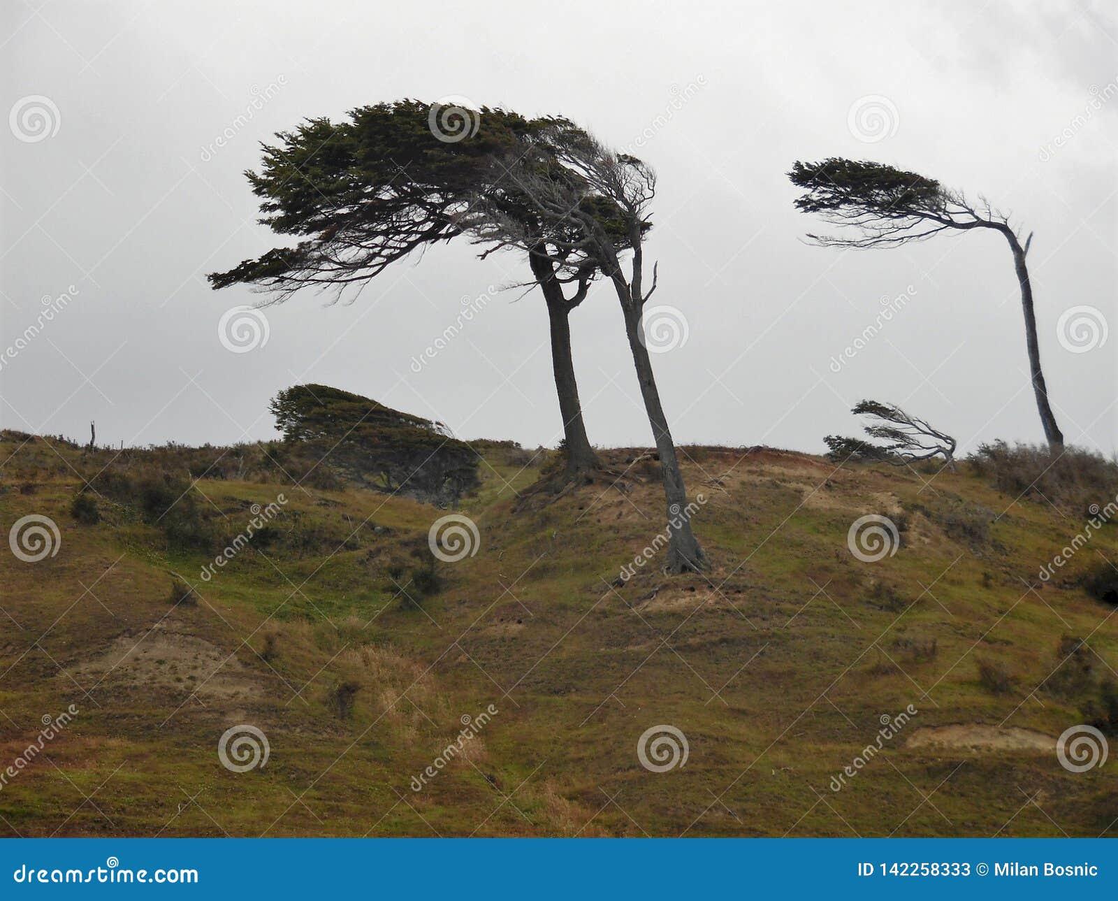 καμμμένα δέντρα