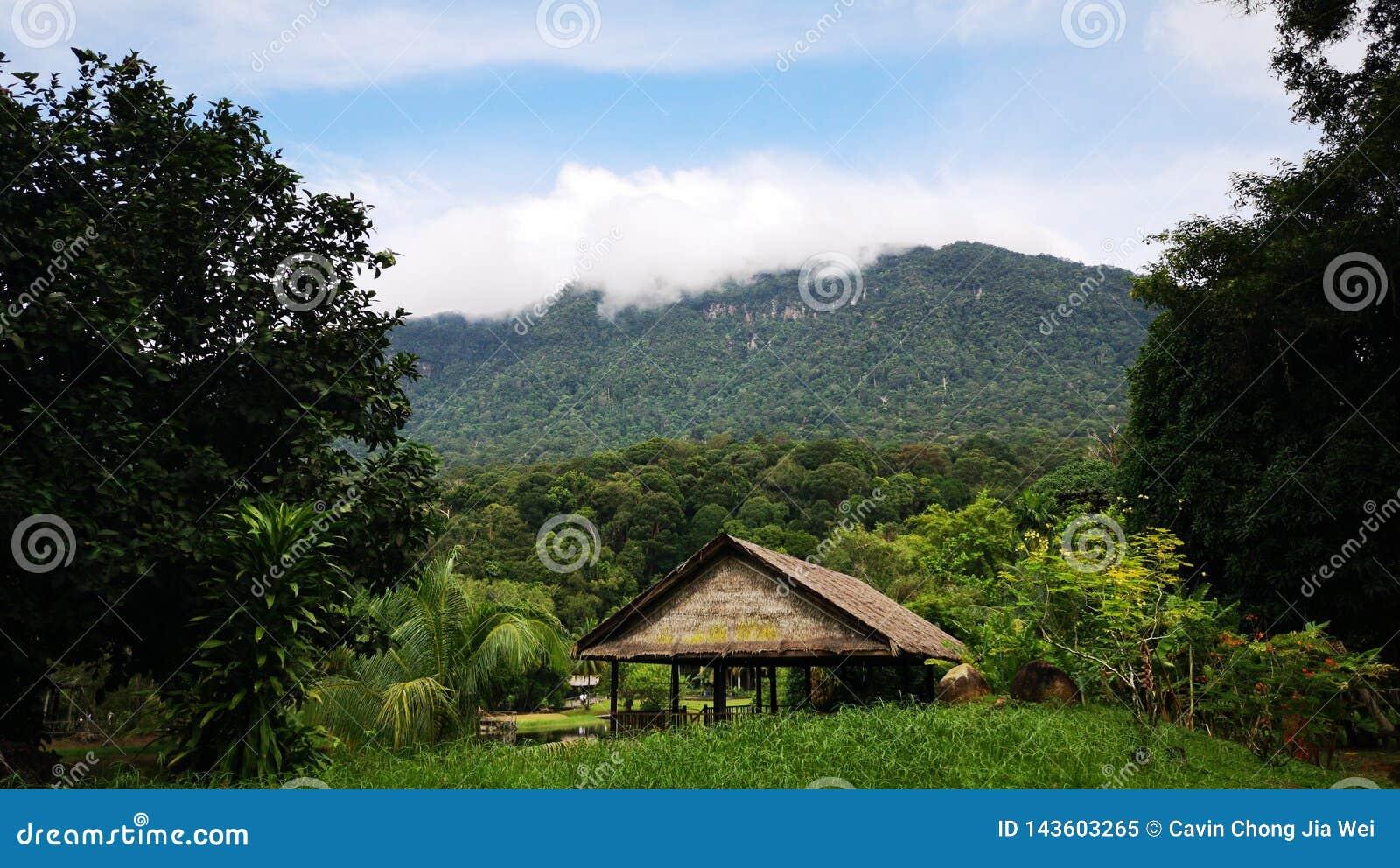Καμπίνα στο δάσος