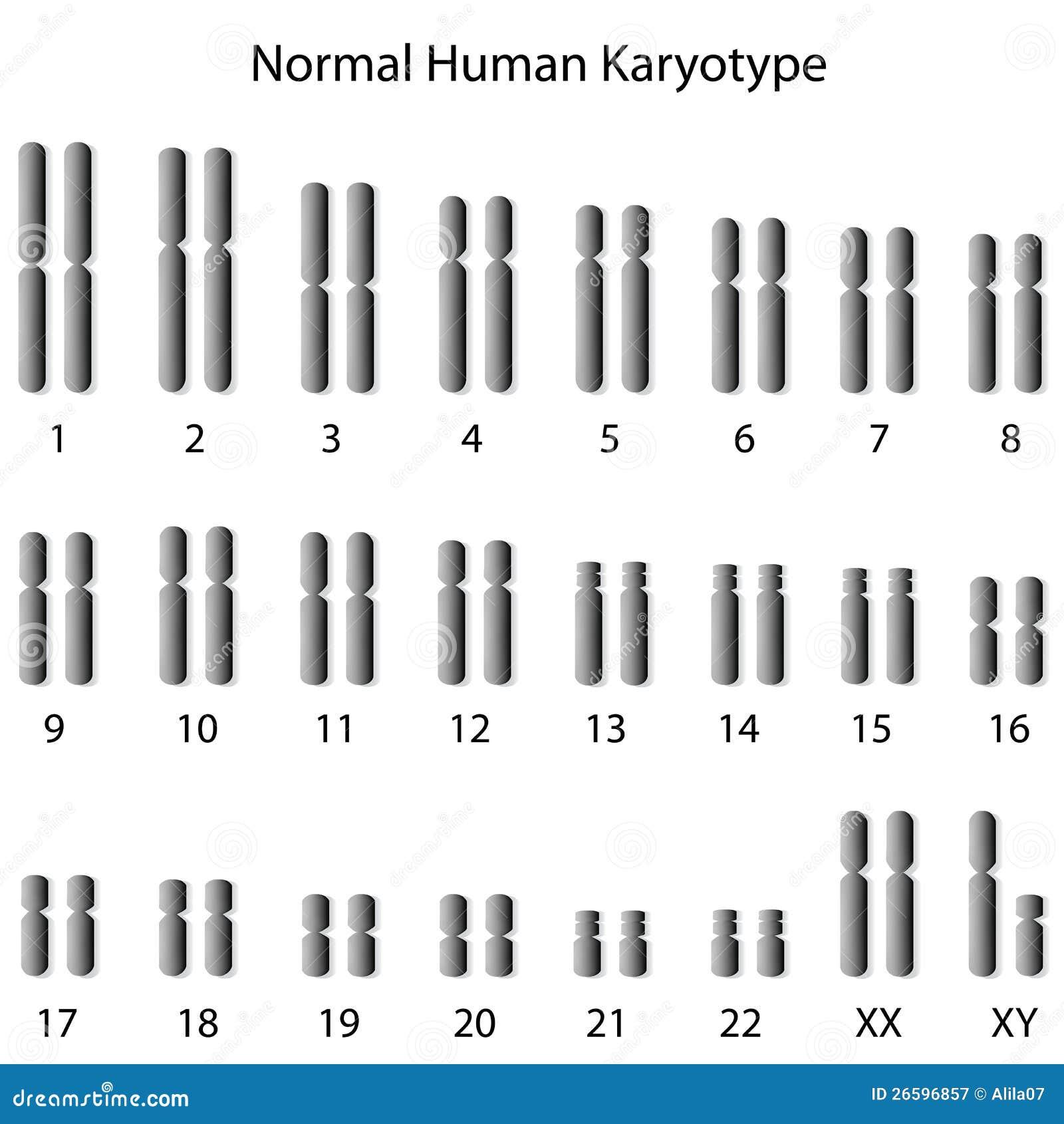 Κανονικό ανθρώπινο karyotype