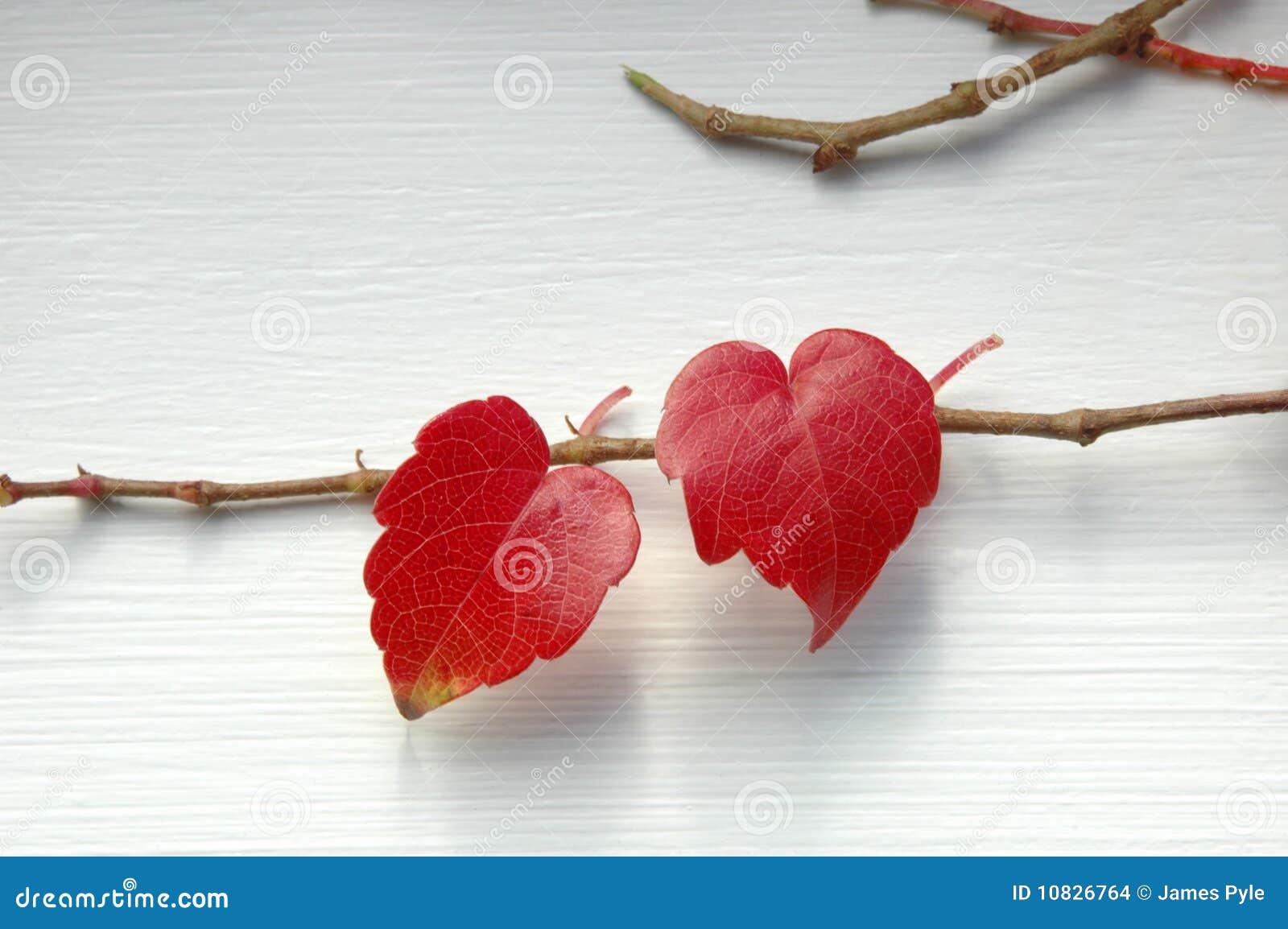 καρδιές φυσικά δύο