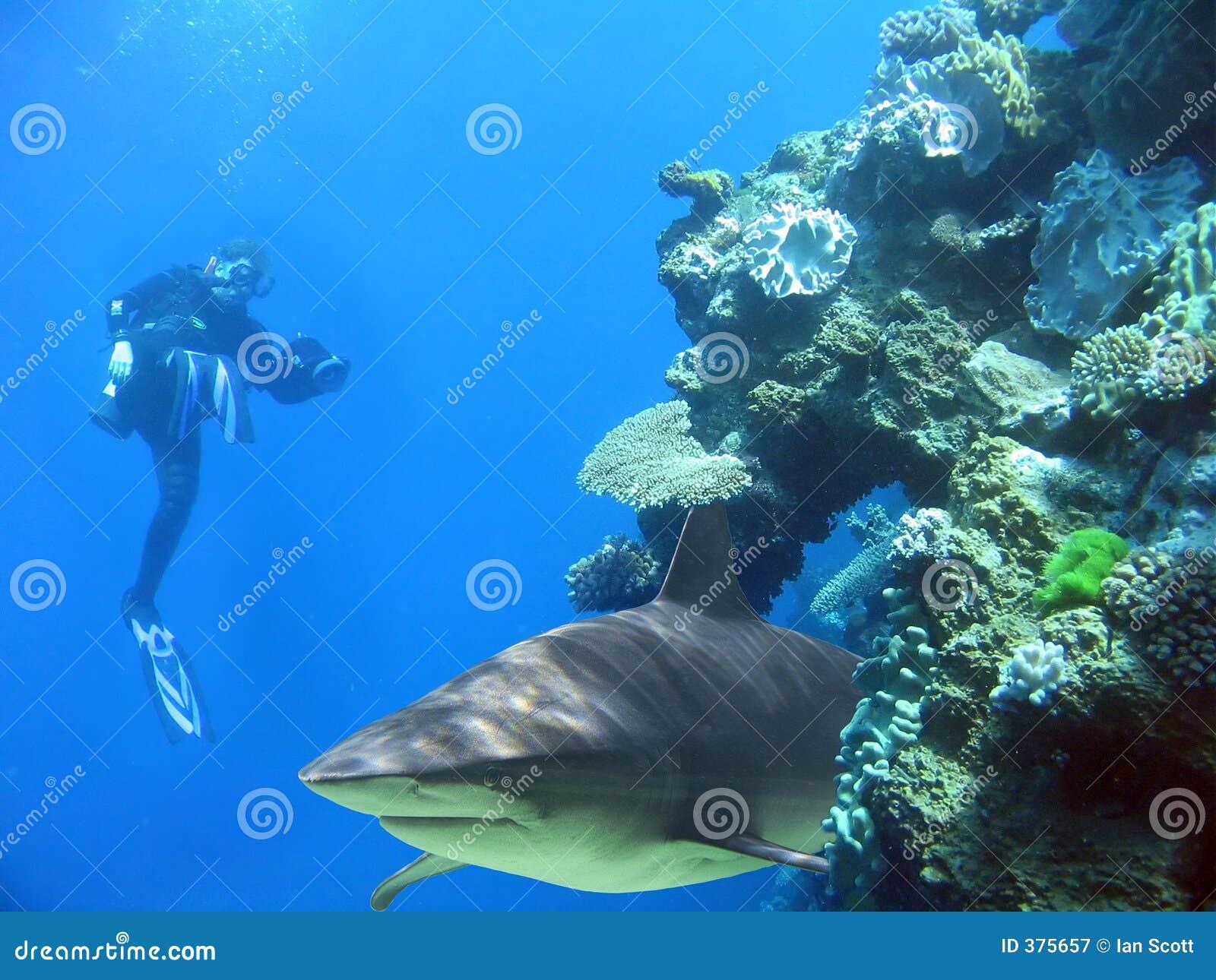καρχαρίας ατόμων