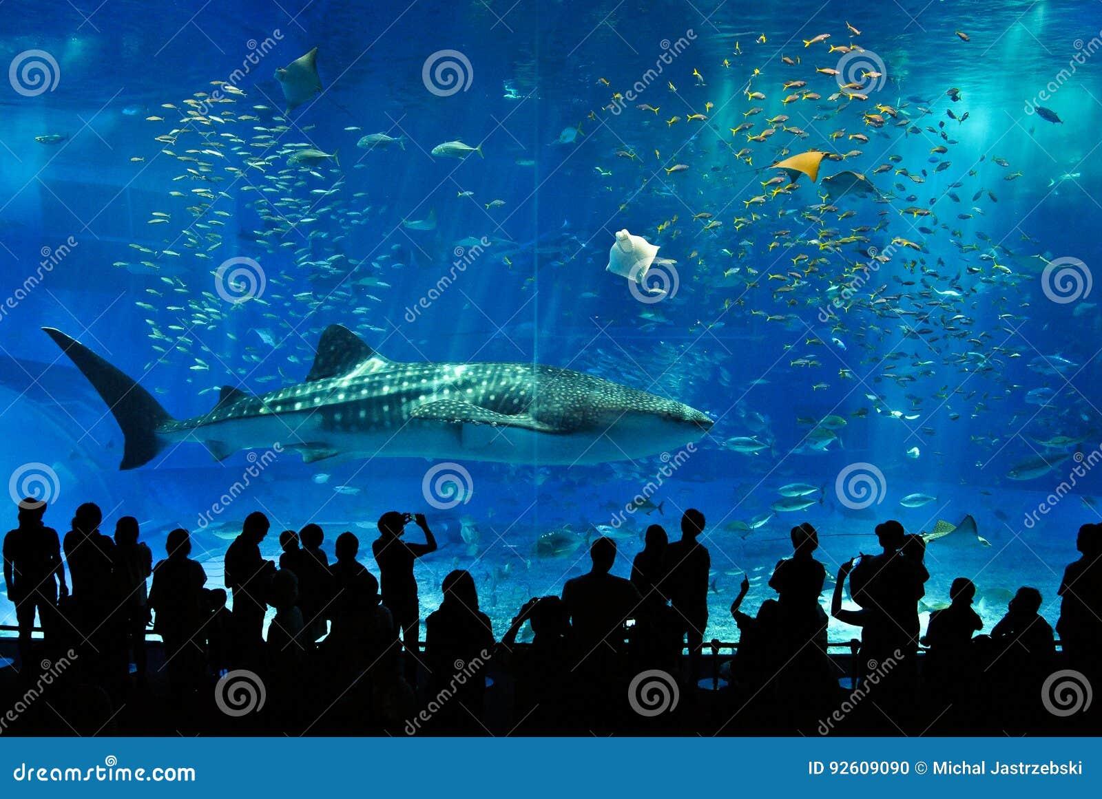Καρχαρίας φαλαινών που περιβάλλεται από τα ψάρια