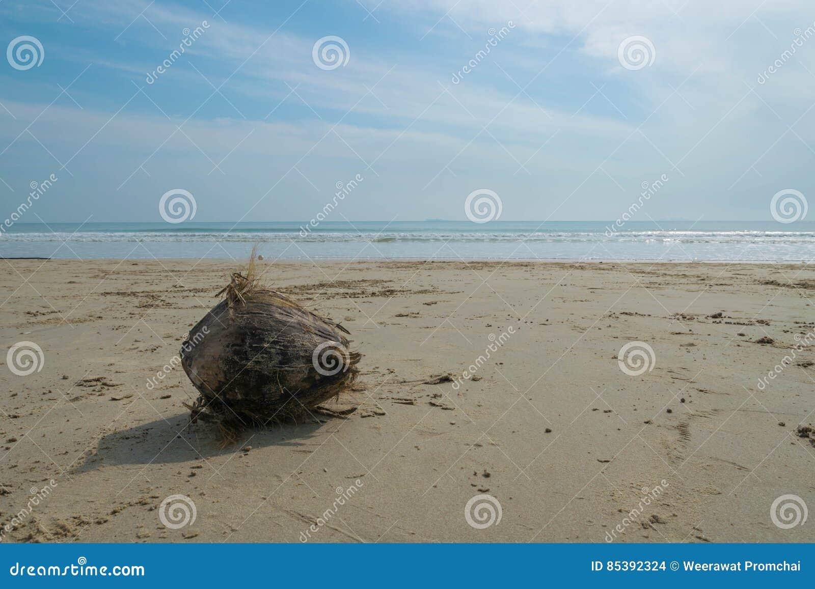 Καρύδα σε μια παραλία