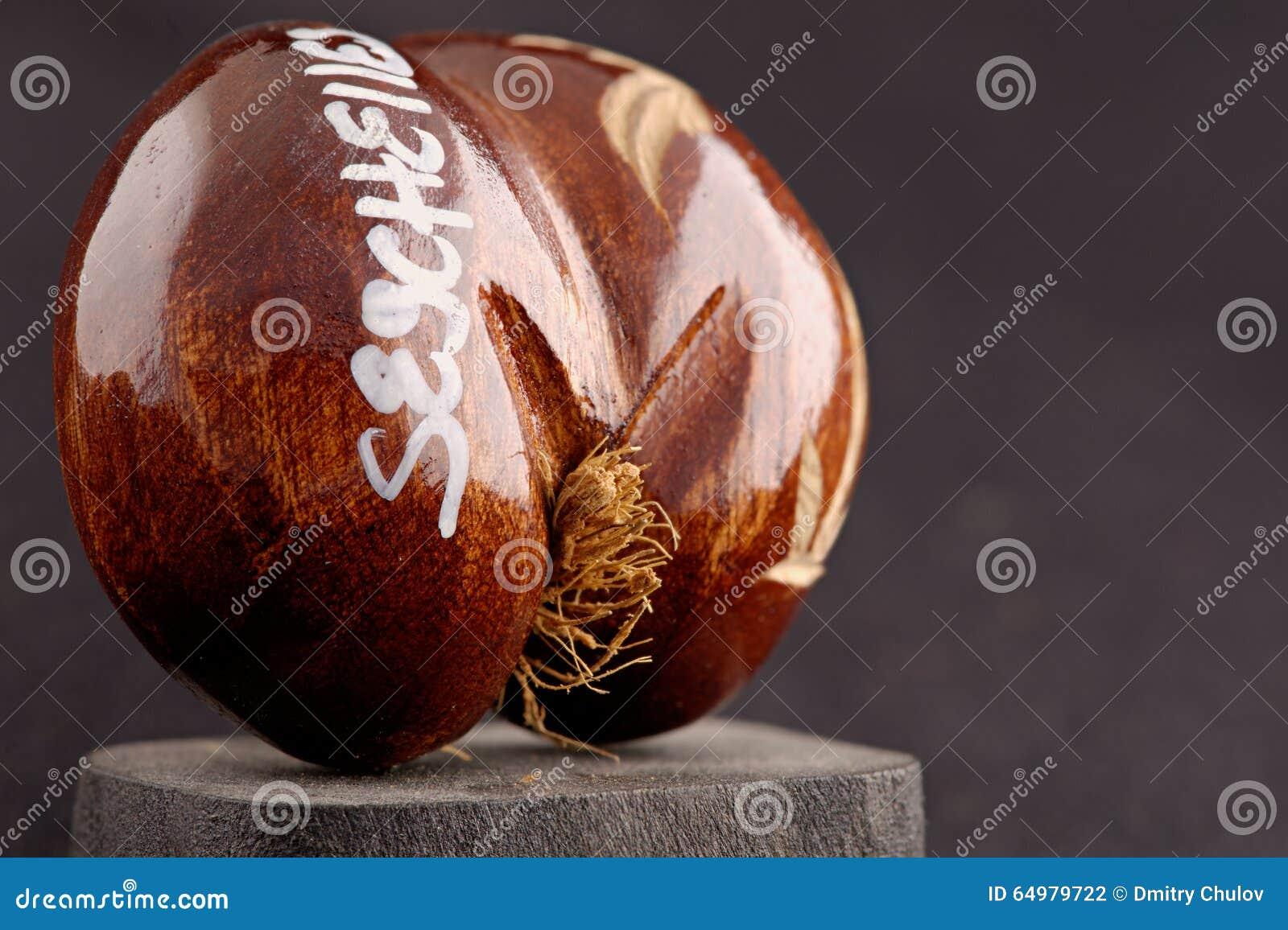 Καρύδες της θάλασσας των Σεϋχελλών (coco de mer) - αρχικό αναμνηστικό από τις Σεϋχέλλες