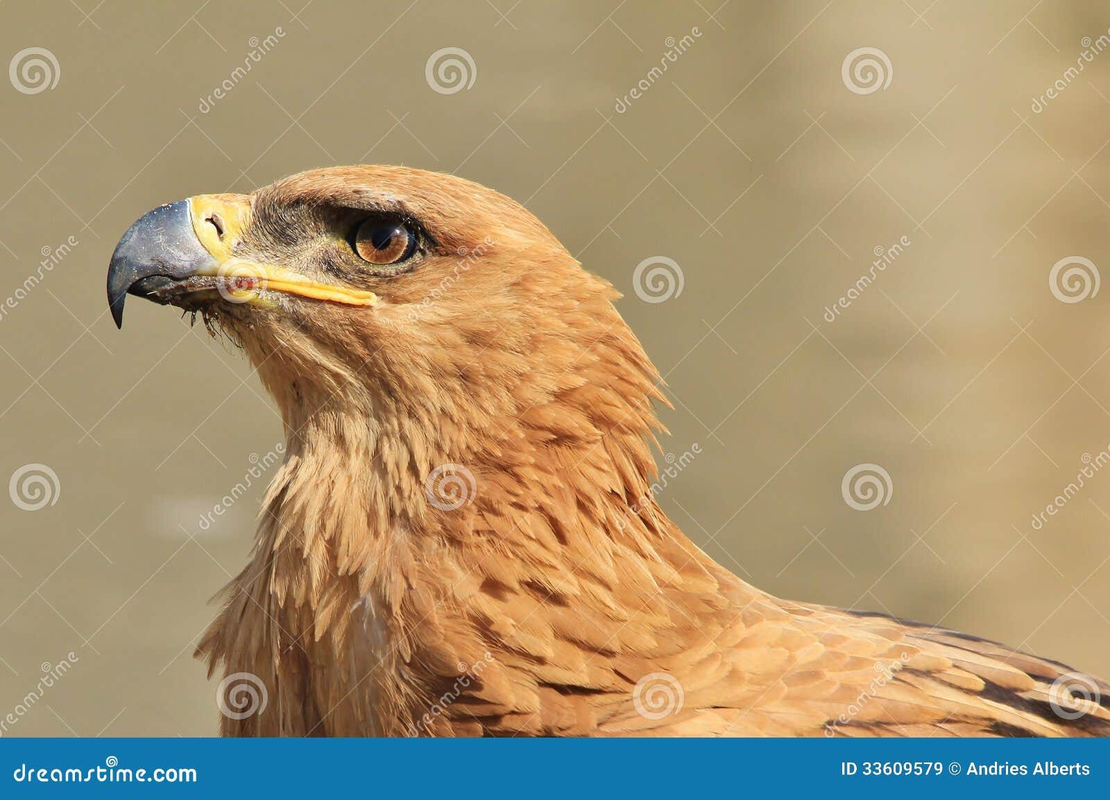 Ξανθιά με μεγάλο πουλί