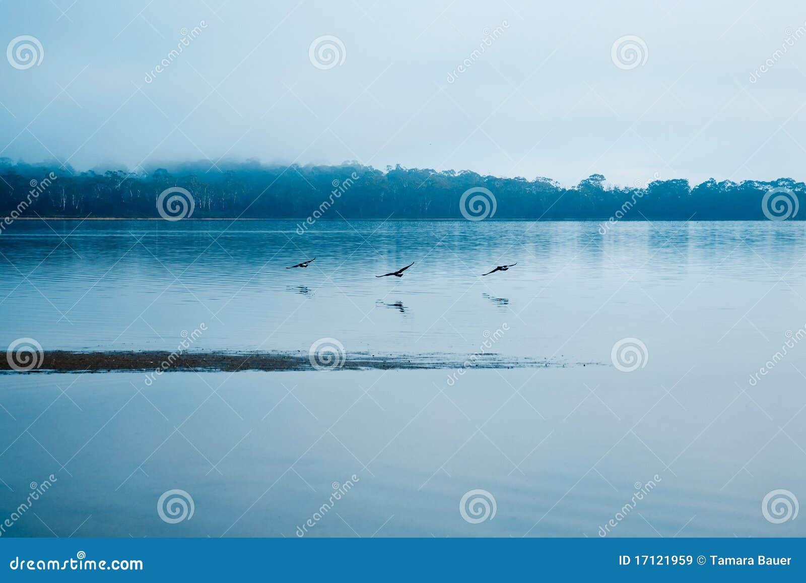 κατά μήκος των πουλιών πο&upsilo