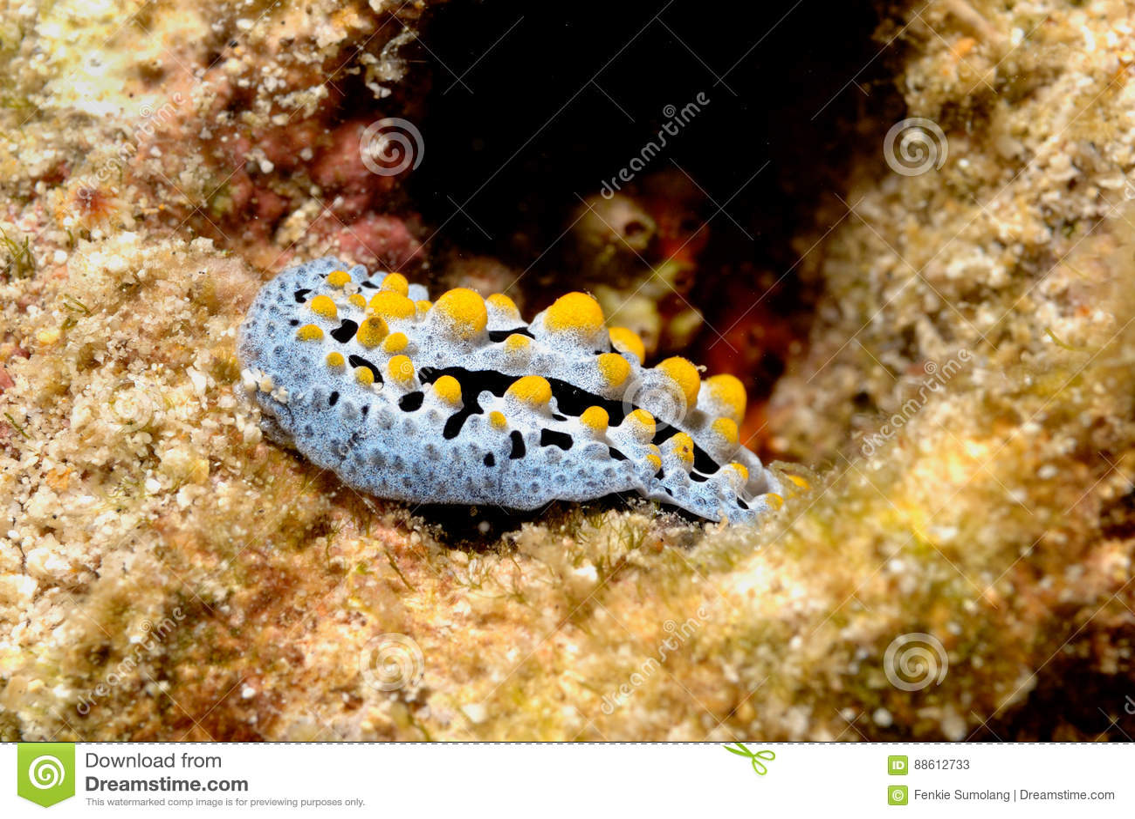 Κατάδυση σκαφάνδρων της Ινδονησίας Nudibranch aceh