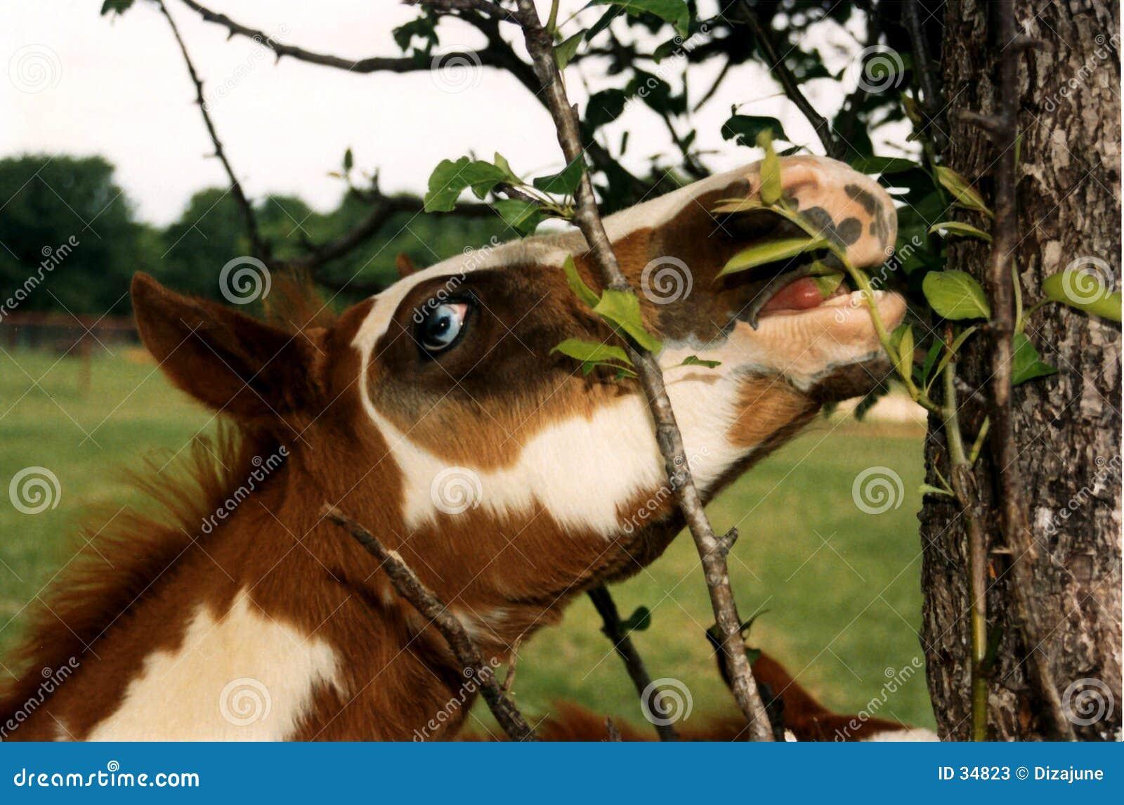 κατανάλωση foal του χρώματος φύλλων