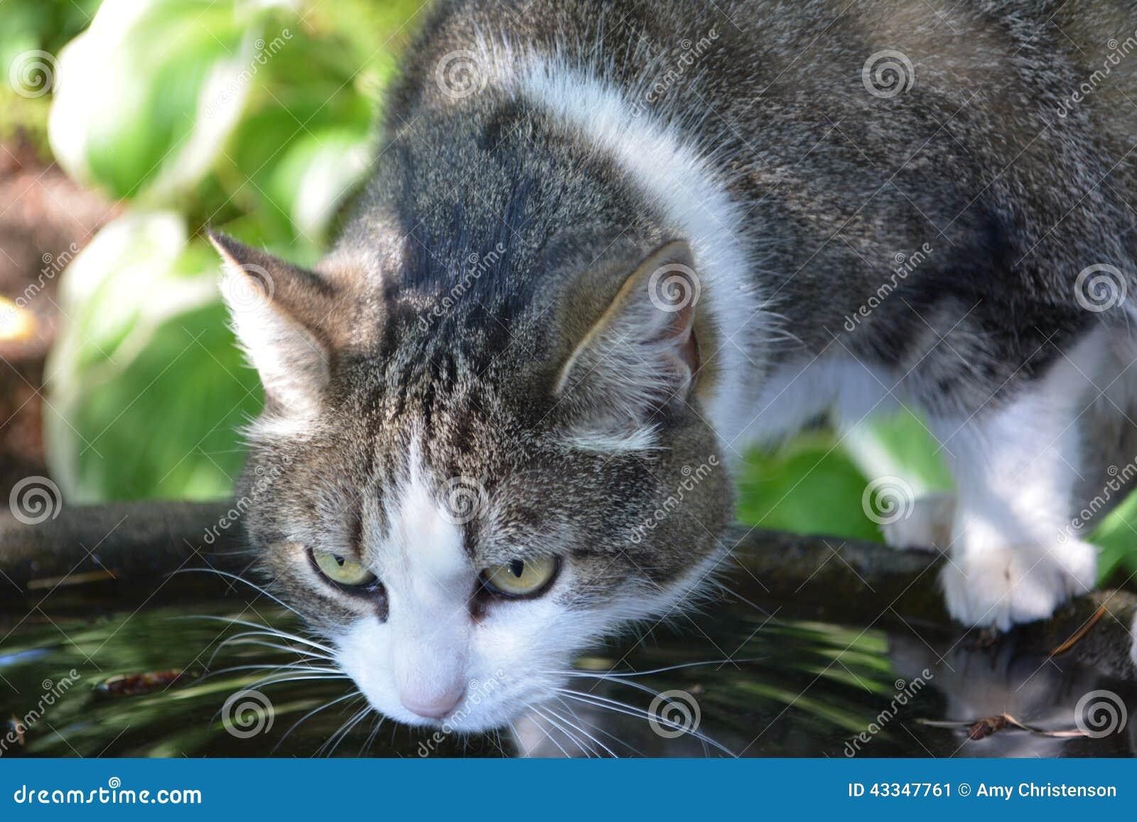 Κατανάλωση γατών