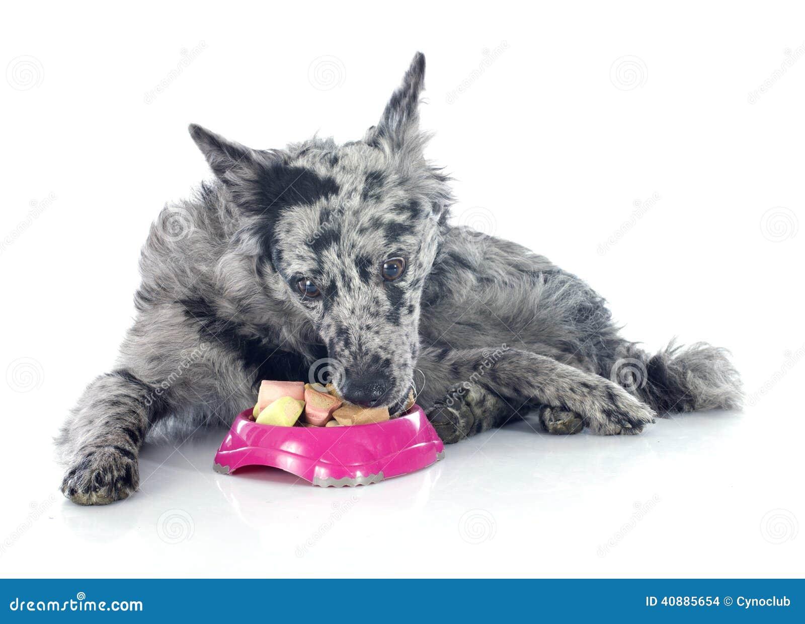 Κατανάλωση του ουγγρικού σκυλιού