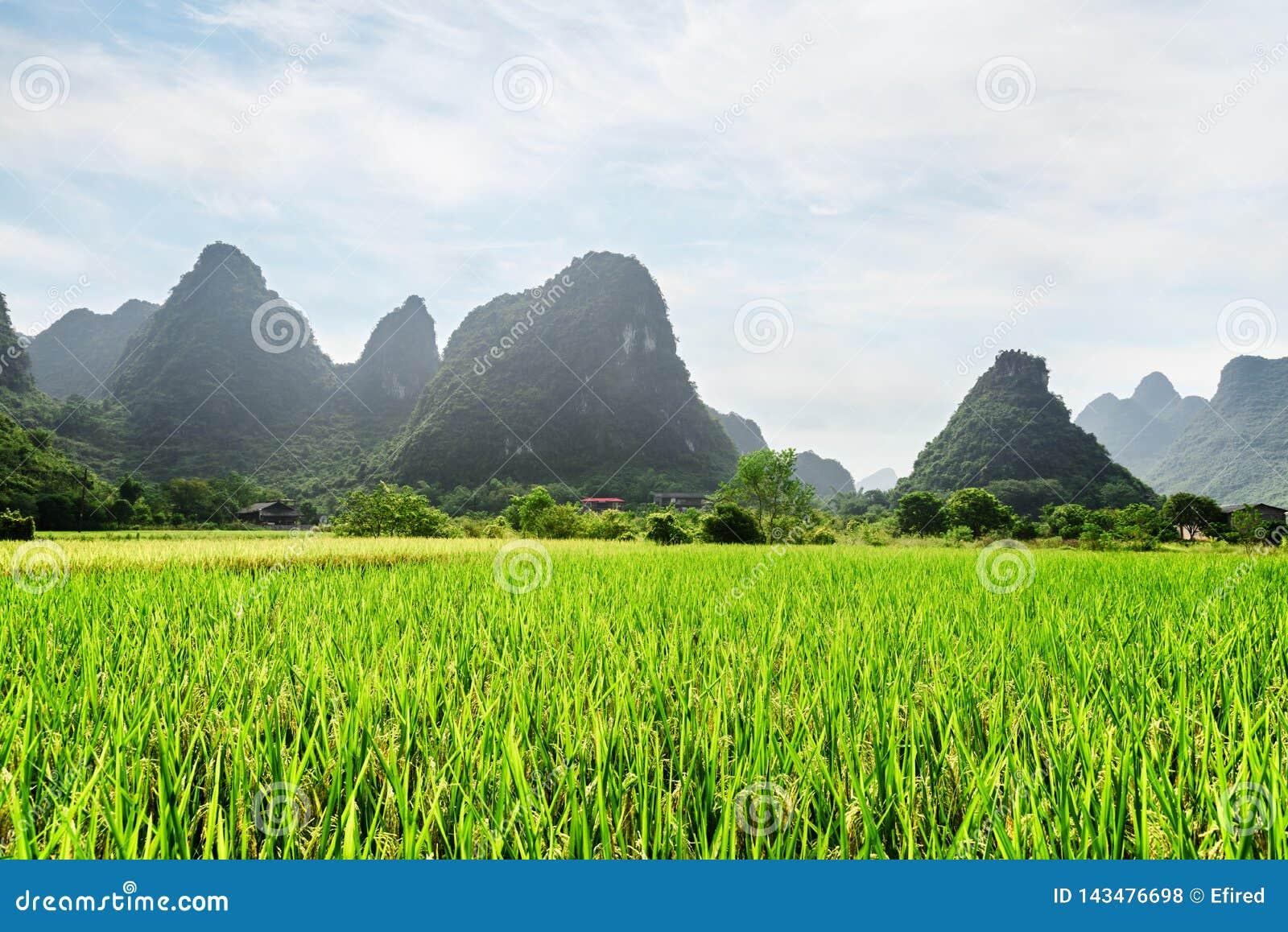 Καταπληκτική άποψη του πράσινου τομέα ρυζιού και των φυσικών βουνών καρστ