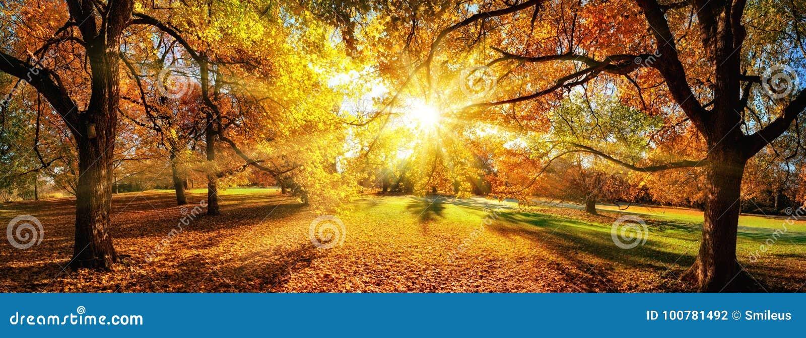 Καταπληκτικό πανοραμικό τοπίο φθινοπώρου σε ένα πάρκο