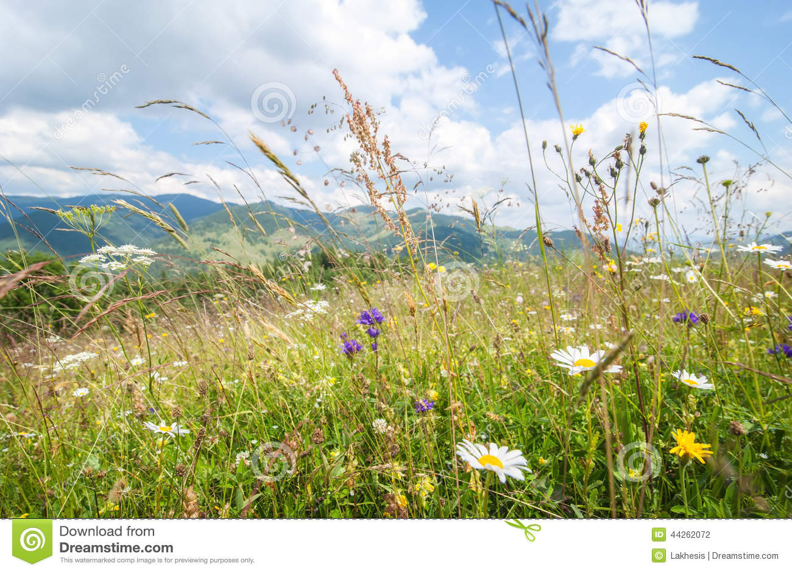 Καταπληκτική ηλιόλουστη ημέρα στα βουνά Θερινό λιβάδι με τα wildflowers