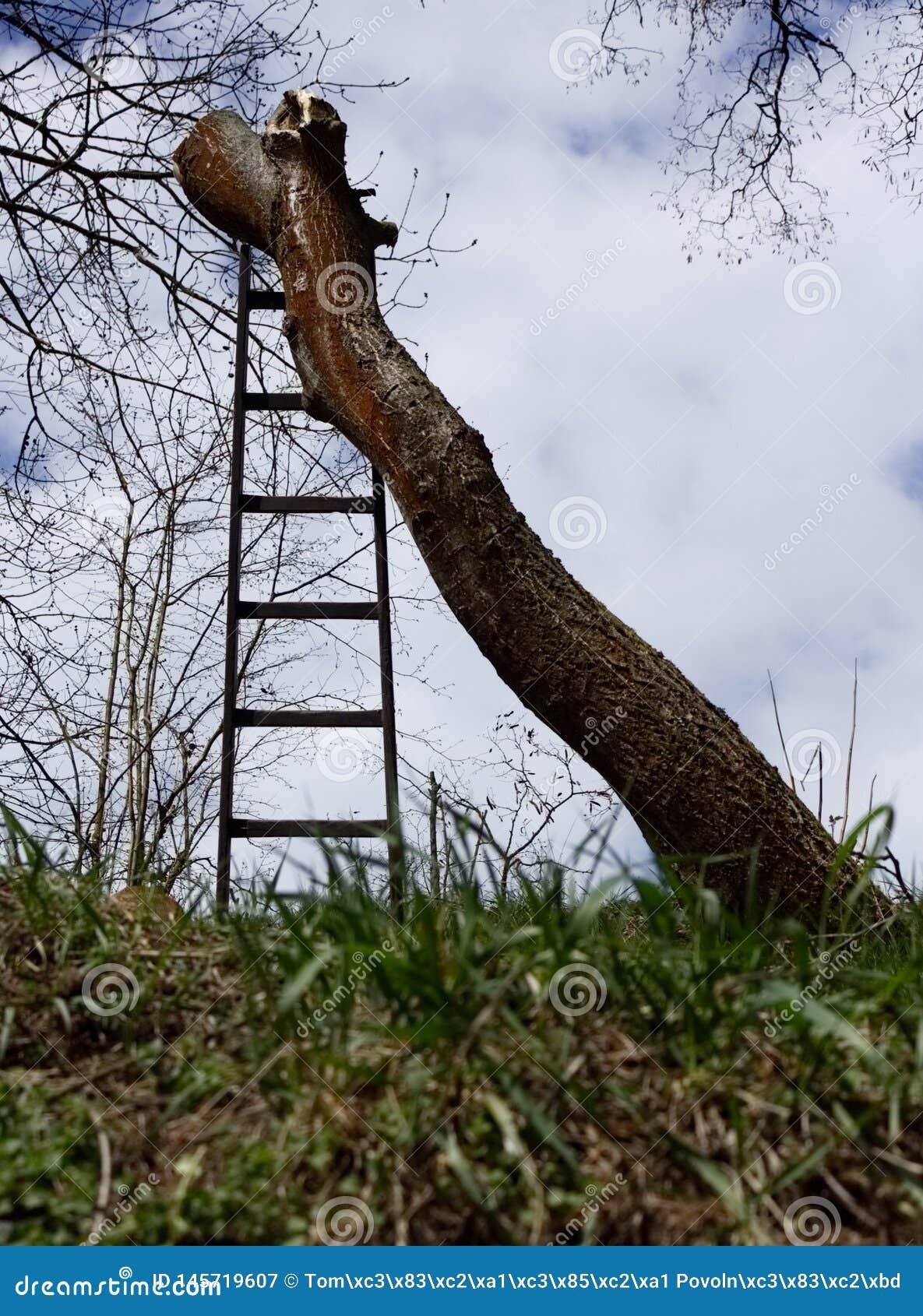 Καταρριφθείς κορμός δέντρων χωρίς κλάδους που στέκονται με τη σκάλα