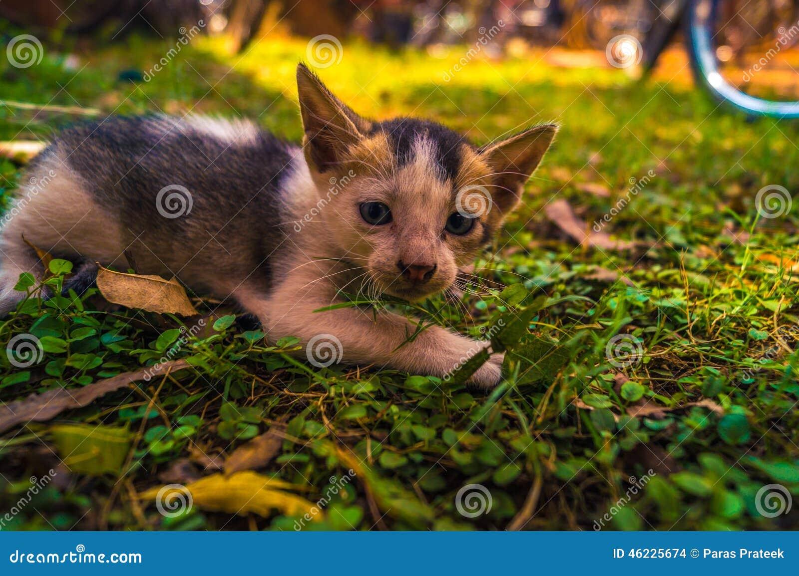 Κατασκόπευση γατακιών