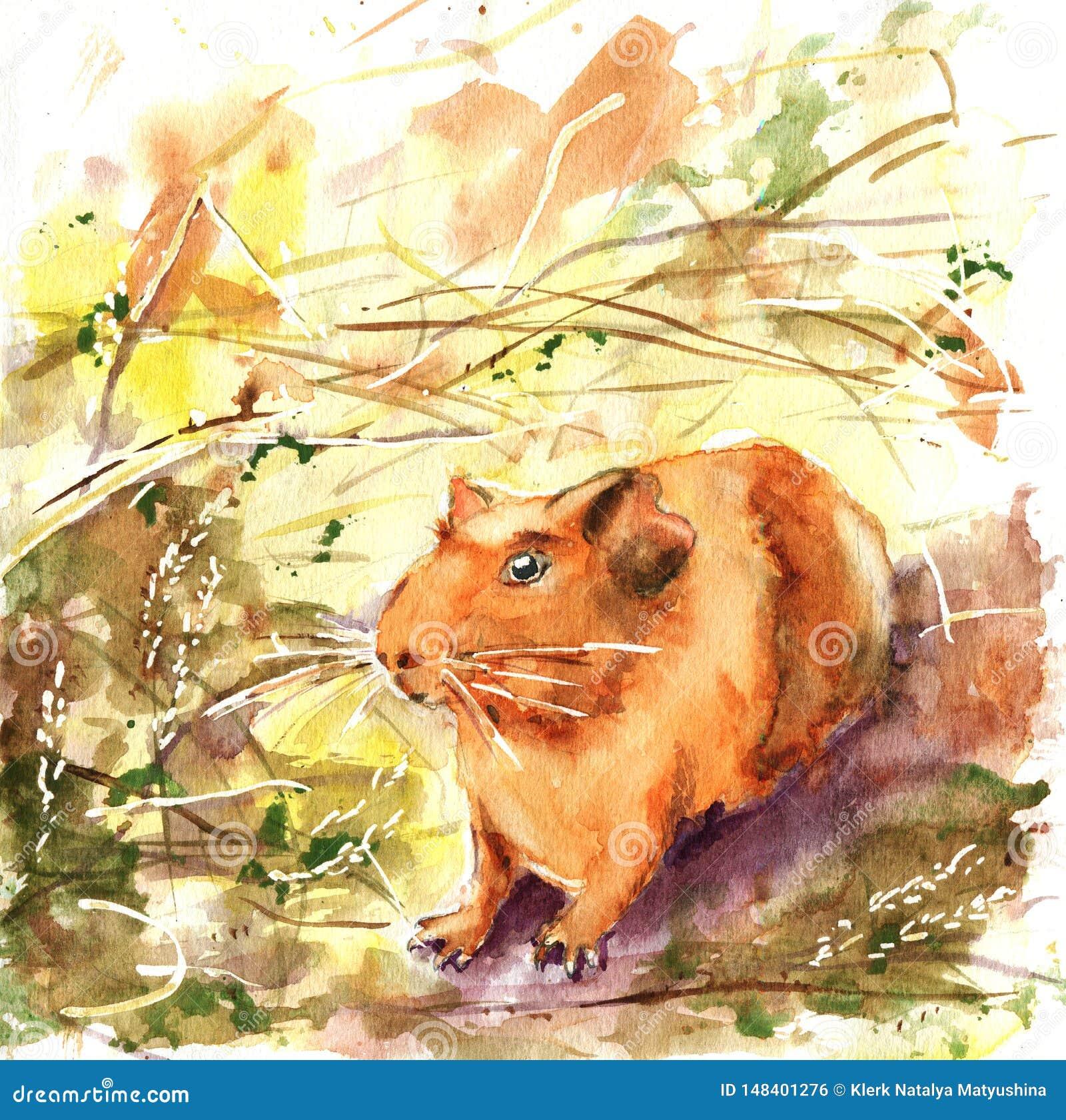 Κατοικίδια ζώα, ινδικό χοιρίδιο Σύροντας με το watercolor για το σχέδιο του υποβάθρου, τυπωμένη ύλη, έμβλημα, διαφήμιση, αγγελίες