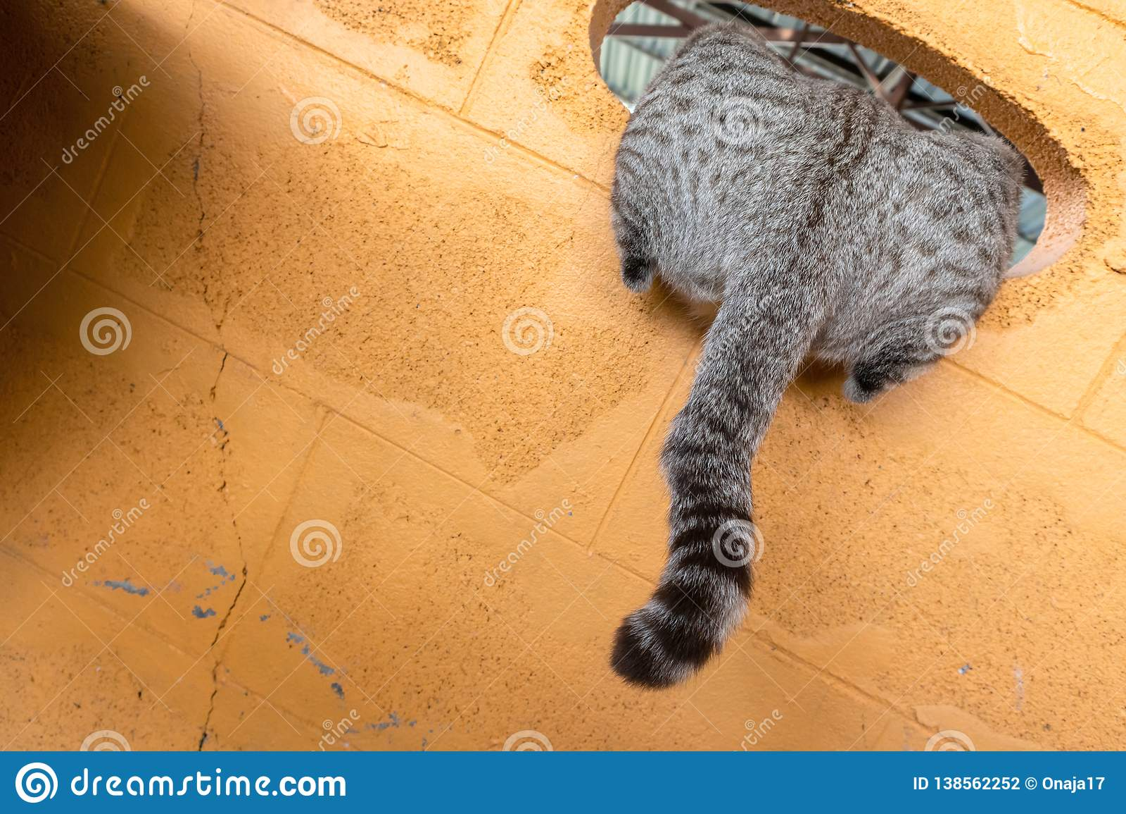 κατοικίδιο ζώο γατακιών γατακιών γατών
