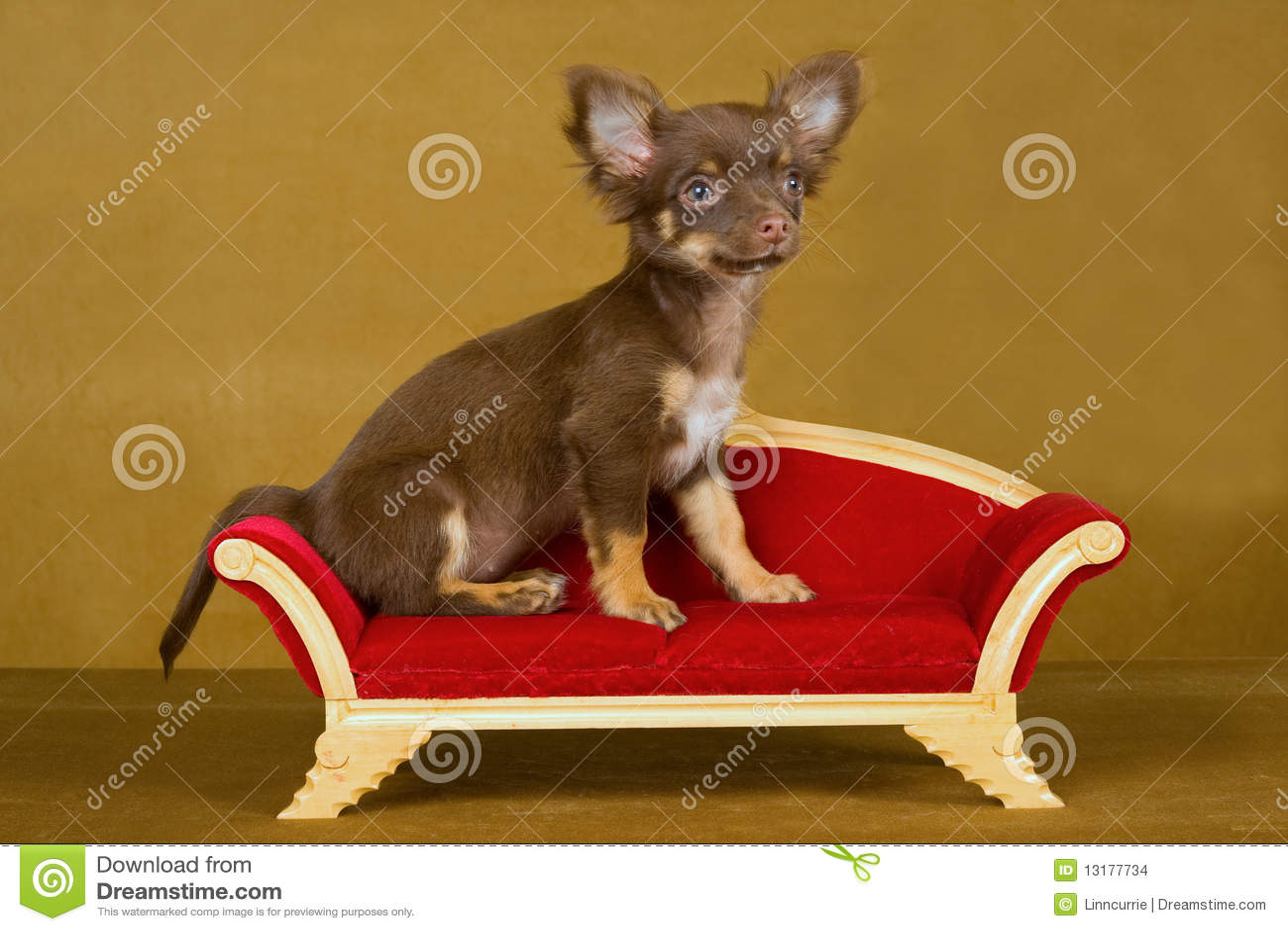 καφετής καναπές κουταβ&iota