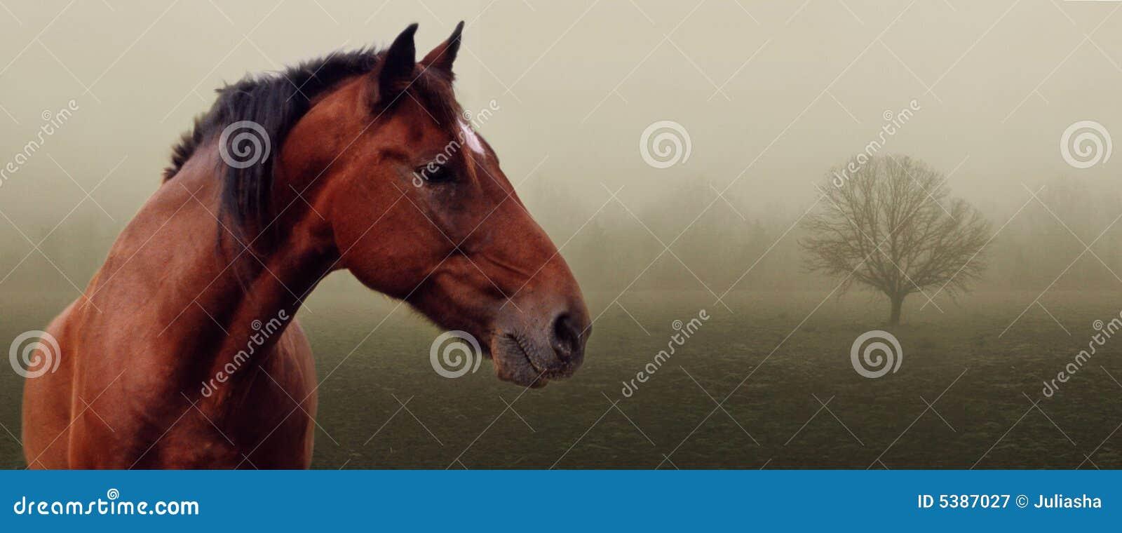 καφετί άλογο ομίχλης