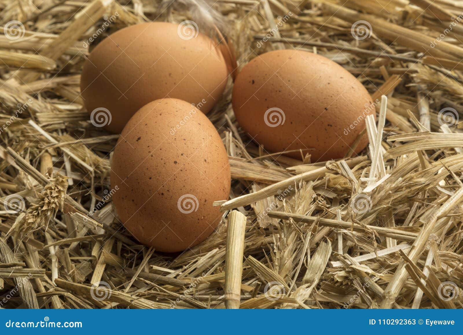 Φρεσκάδα των αυγών