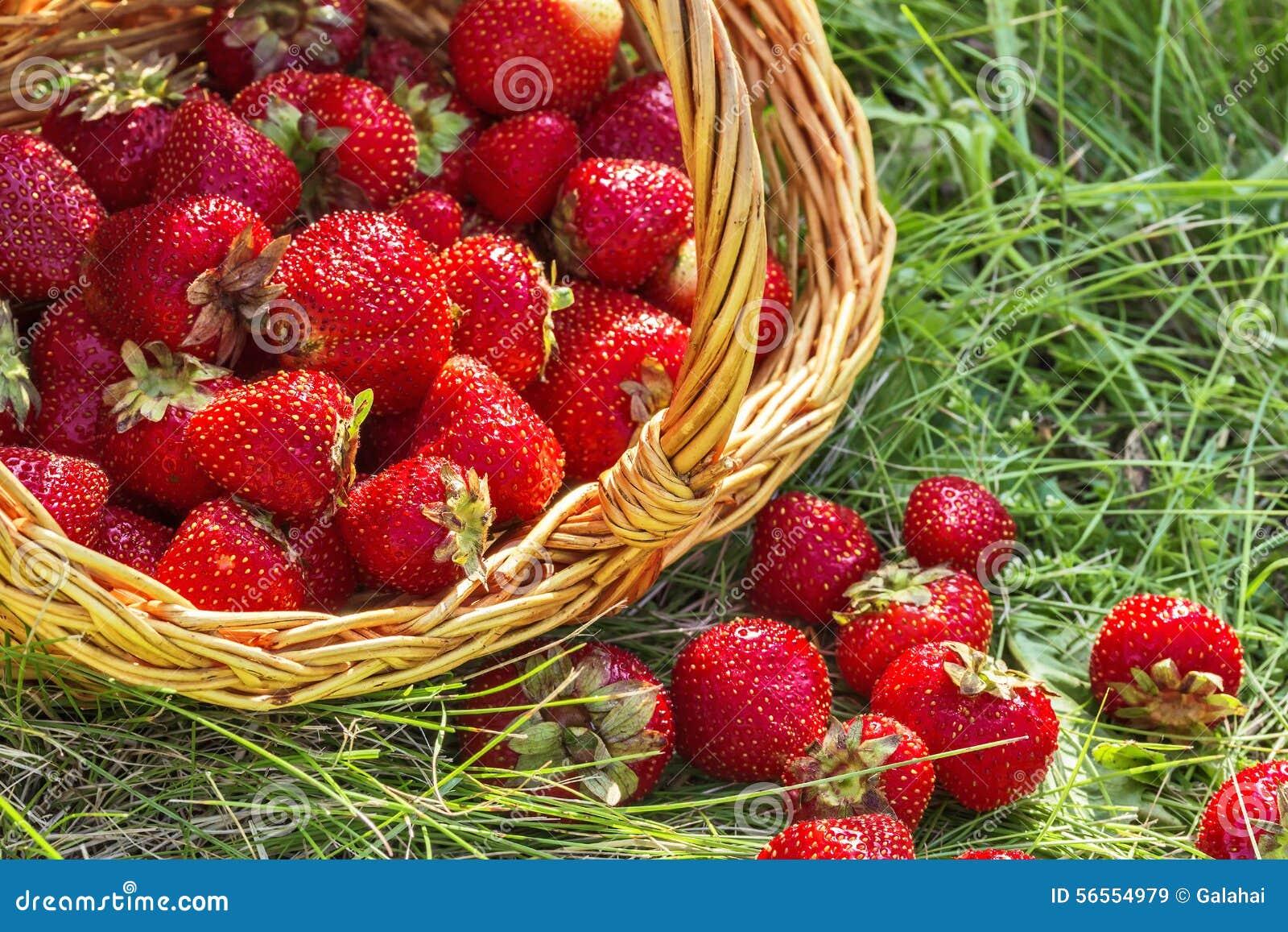 Download Καλάθι των φραουλών κοντά επάνω Στοκ Εικόνα - εικόνα από χλωρίδα, φύση: 56554979