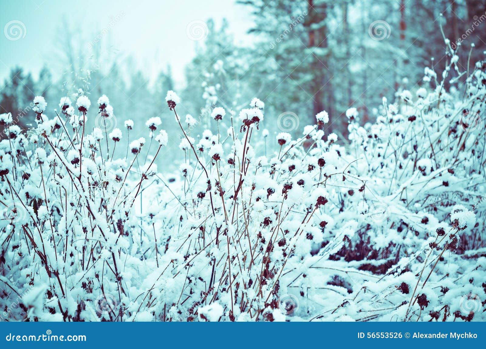 Download καλυμμένα όρη σπιτιών ελβετικά χειμερινά δάση χιονιού σκηνής μικρά Στοκ Εικόνες - εικόνα από βακκινίων, κάλυψη: 56553526