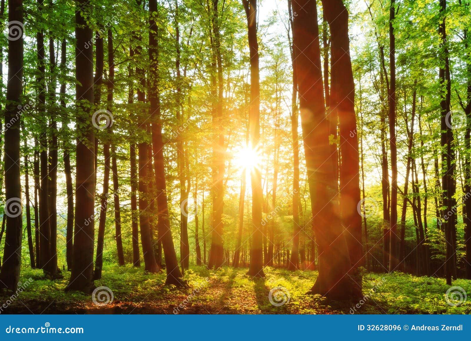 Καλό δασικό ηλιοβασίλεμα