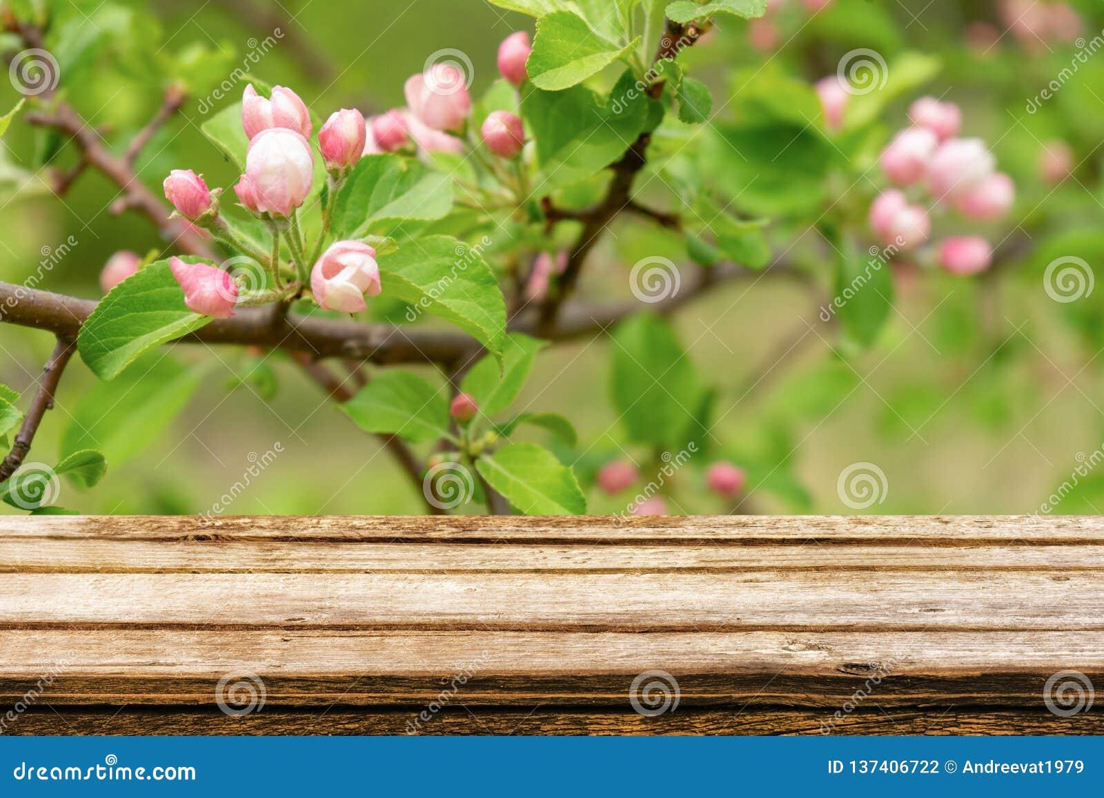 Κενός ξύλινος πίνακας με το υπόβαθρο άνοιξη του ανθίζοντας άγριου δέντρου μηλιάς Χλεύη επάνω για την επίδειξη ή το montage προϊόν