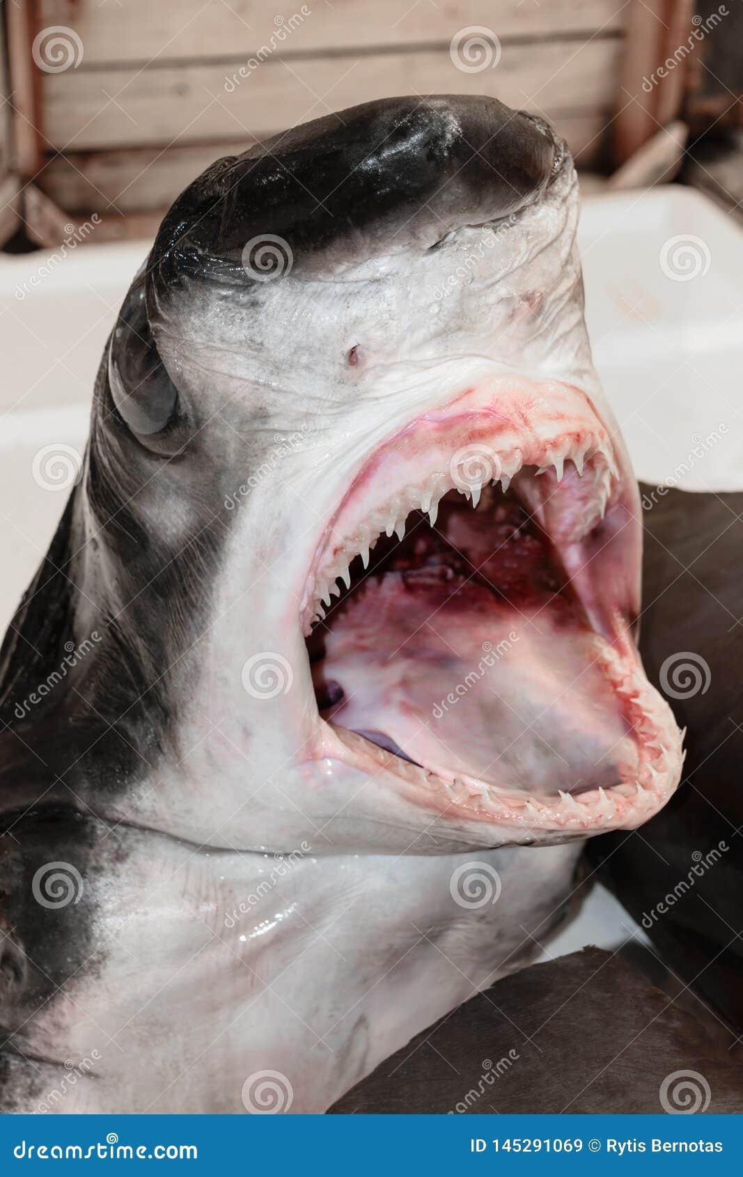 Κεφάλι καρχαριών στην αγορά ψαριών
