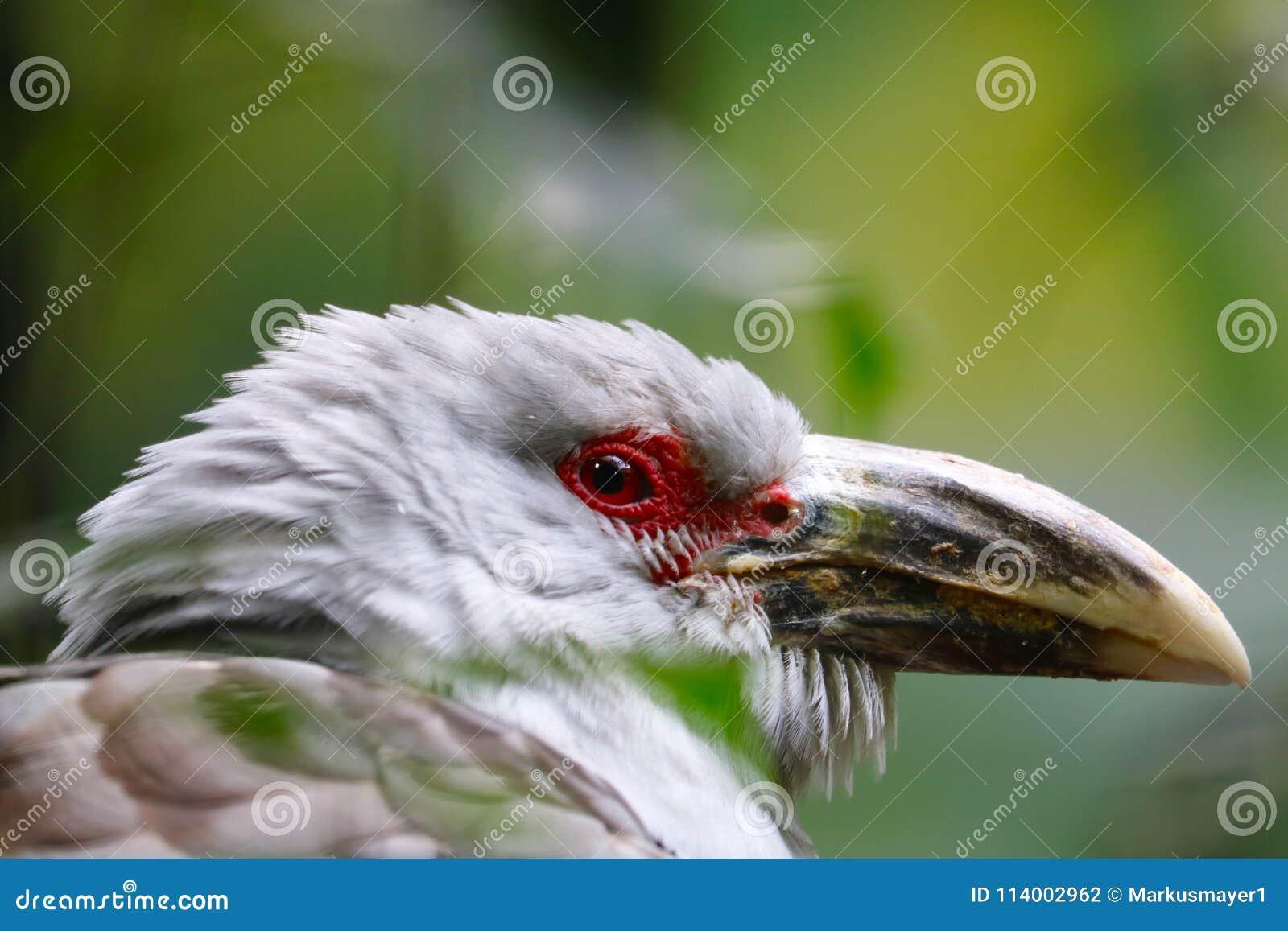 Τεράστιο πουλί κανάλι