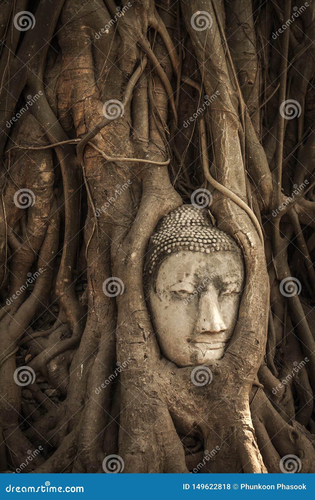 Κεφάλι του Βούδα στις ρίζες δέντρων
