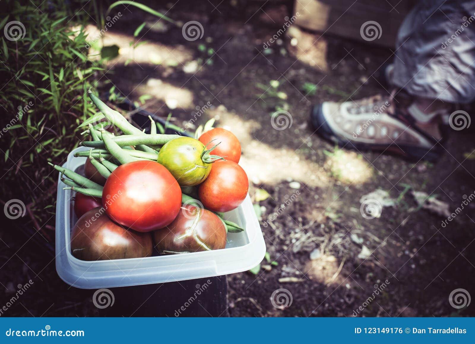 Κηπουρική και veggies για το βραδυνό