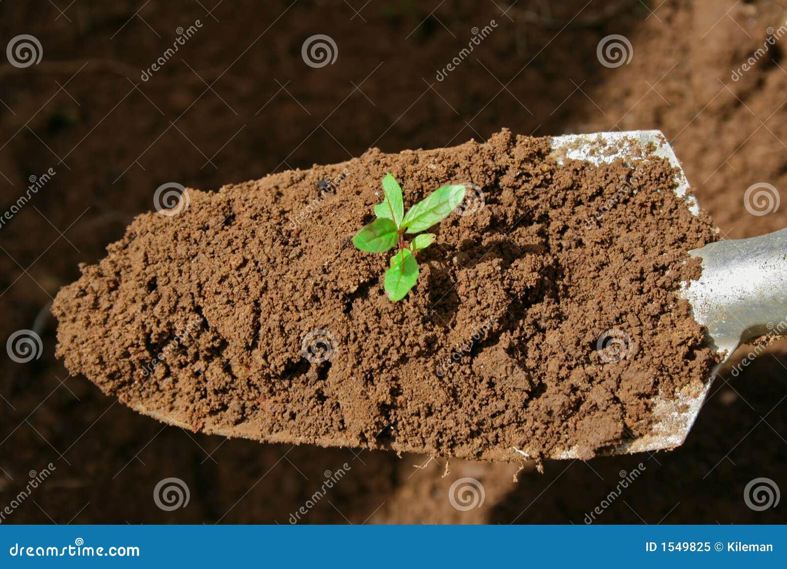 κηπουρική trowel