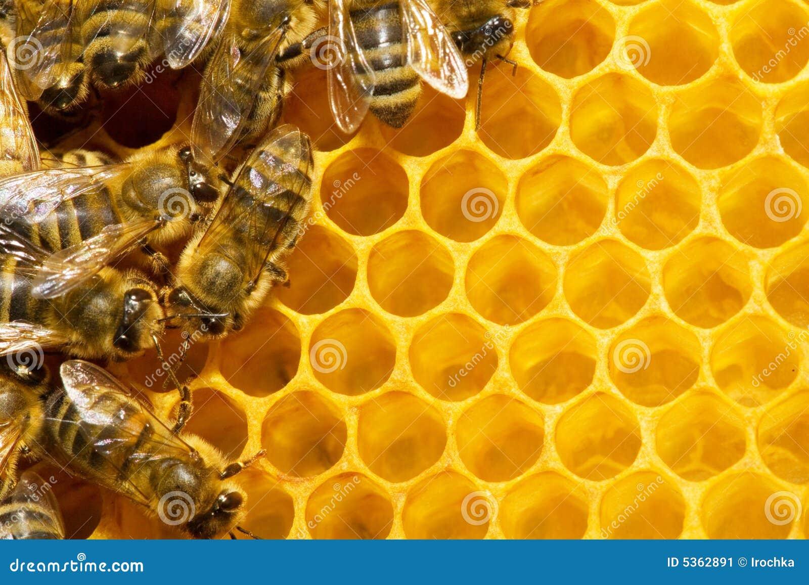 κηρήθρα μελισσών