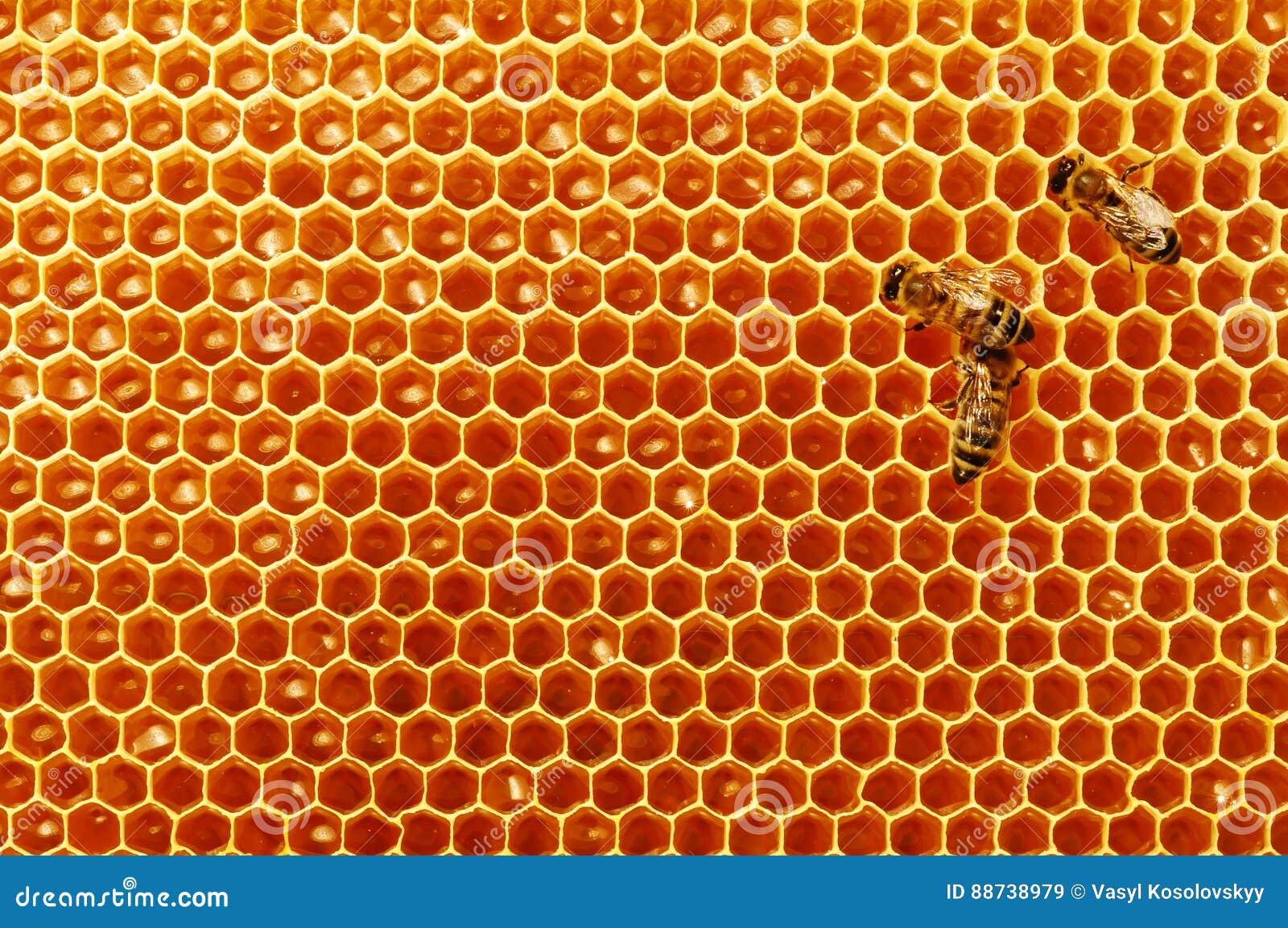 Κηρήθρες μελισσών με το μέλι και τις μέλισσες Μελισσοκομία