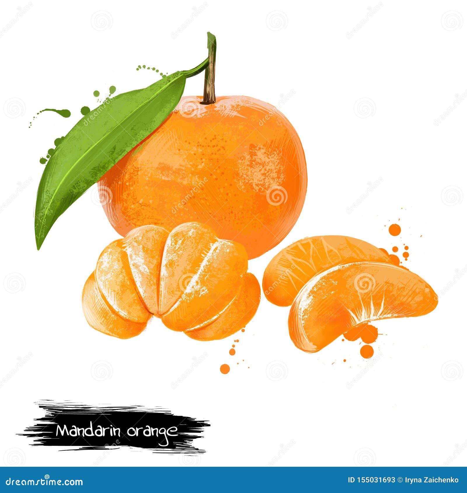 Κινεζική γλώσσα, tangerine εσπεριδοειδές που απομονώνεται στο άσπρο υπόβαθρο