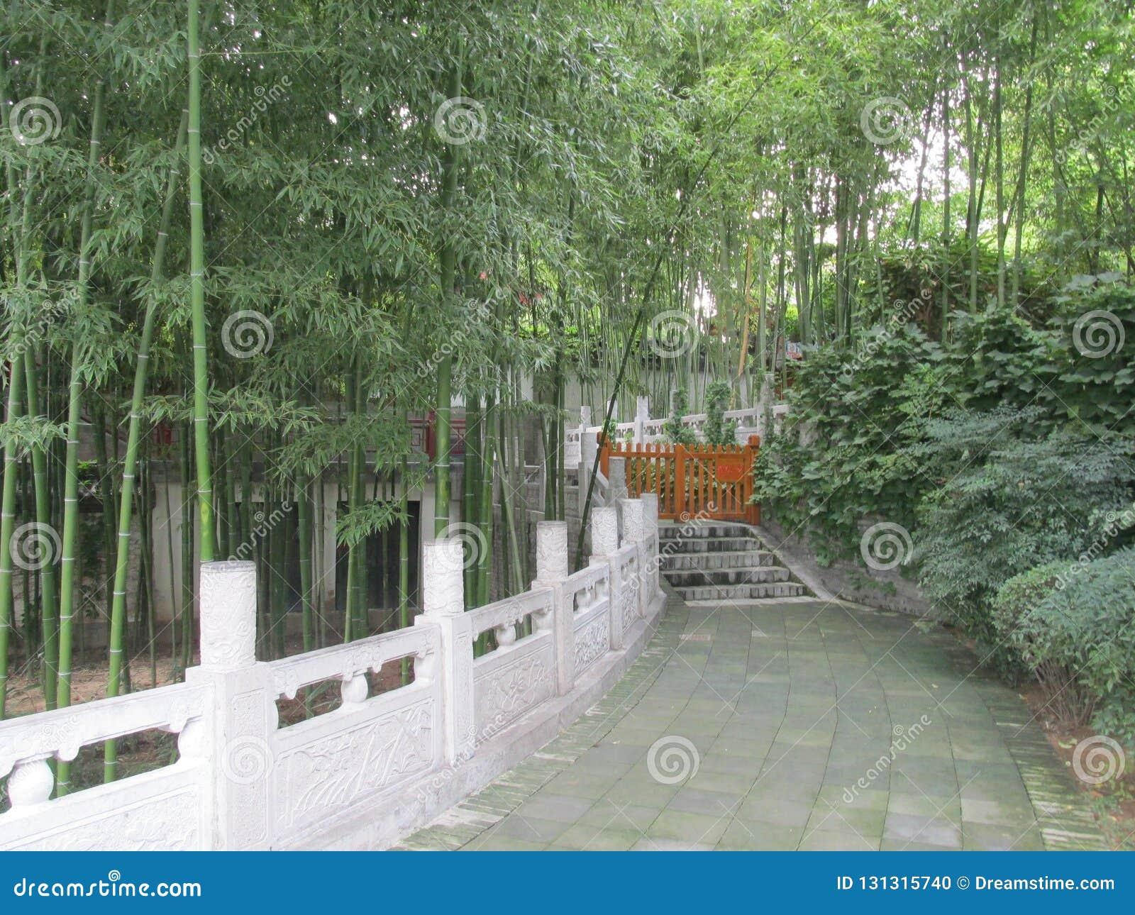 Κινεζικό δάσος μπαμπού