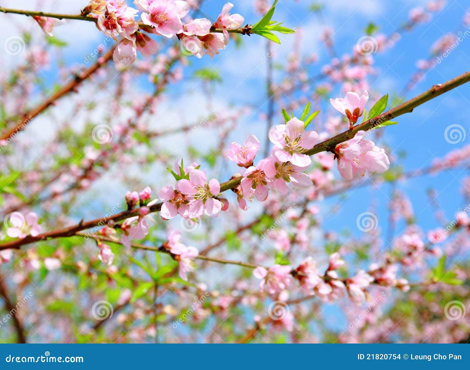 Κινεζικό νέο άνθος λουλούδι-ροδάκινων διακοσμήσεων έτους