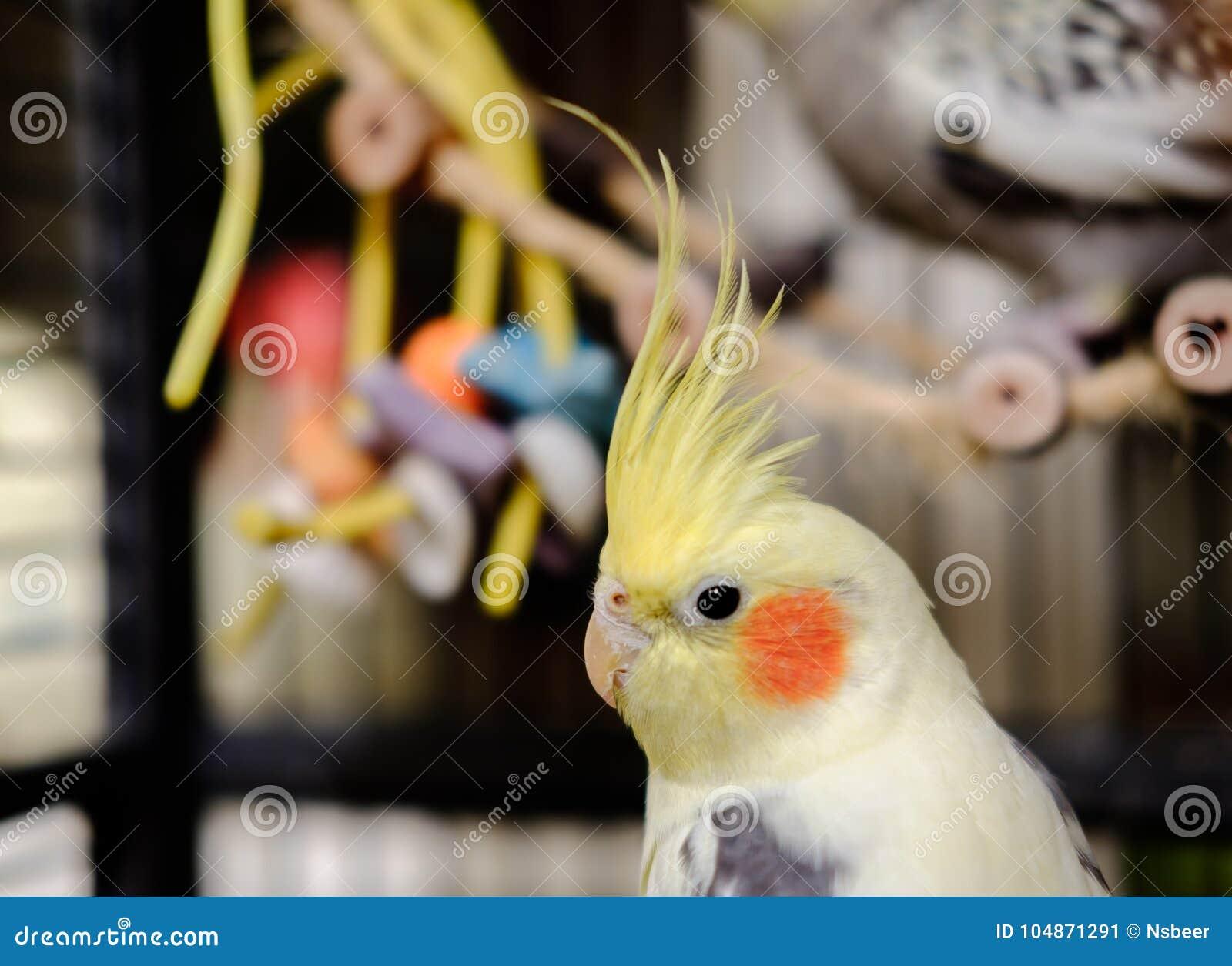 Μεγάλο πουλί αναπαραγωγής