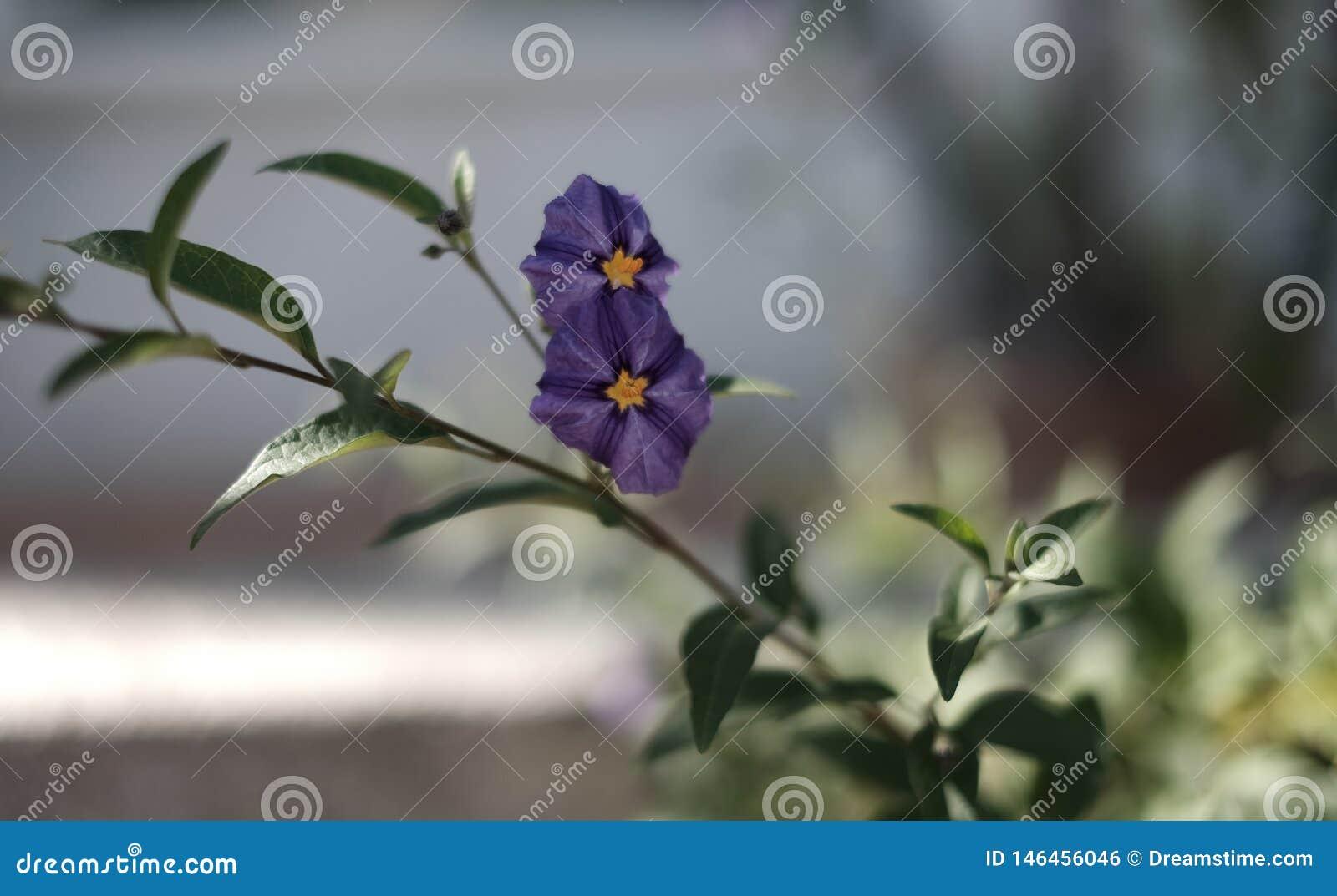 Κινηματογράφηση σε πρώτο πλάνο ενός λουλουδιού