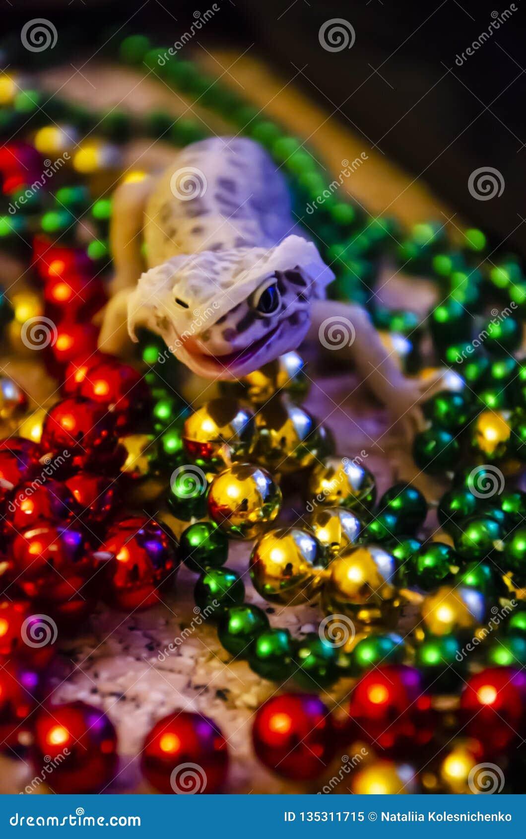 Κινηματογράφηση σε πρώτο πλάνο ενός gecko λεοπαρδάλεων που ρίχνει στη Παραμονή Πρωτοχρονιάς Αρχίζουμε το νέο έτος σε ένα νέο δέρμ