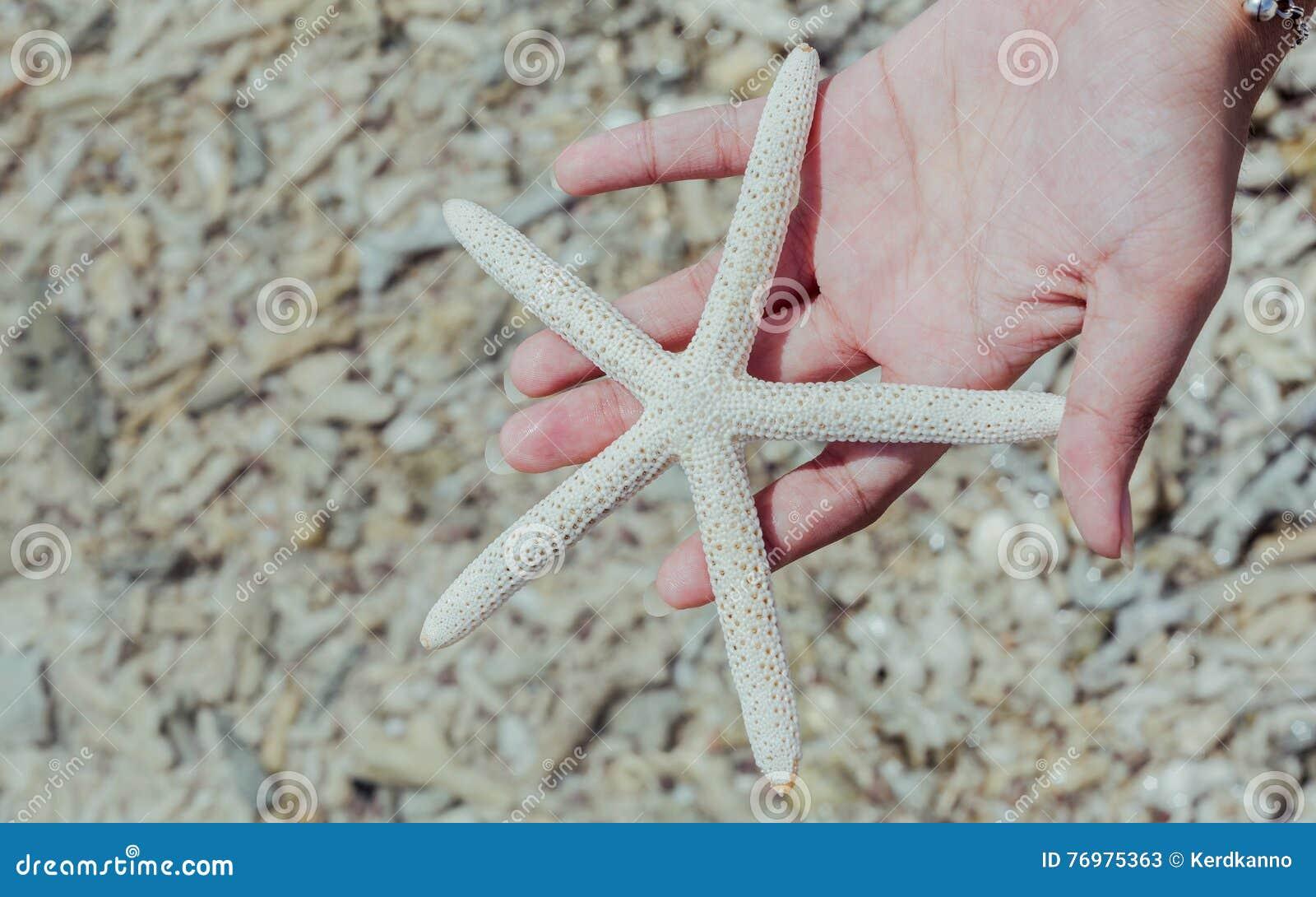 Κινηματογράφηση σε πρώτο πλάνο των ψαριών αστεριών χέρι κοριτσιών στο «s στην τροπική παραλία ταξίδι