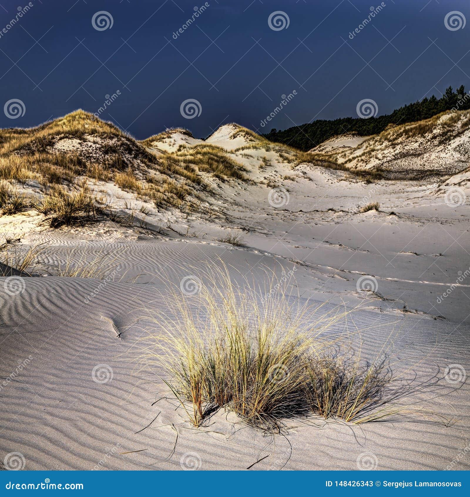 Κινούμενοι αμμόλοφοι, ηλιόλουστη μεσημβρία άνοιξη