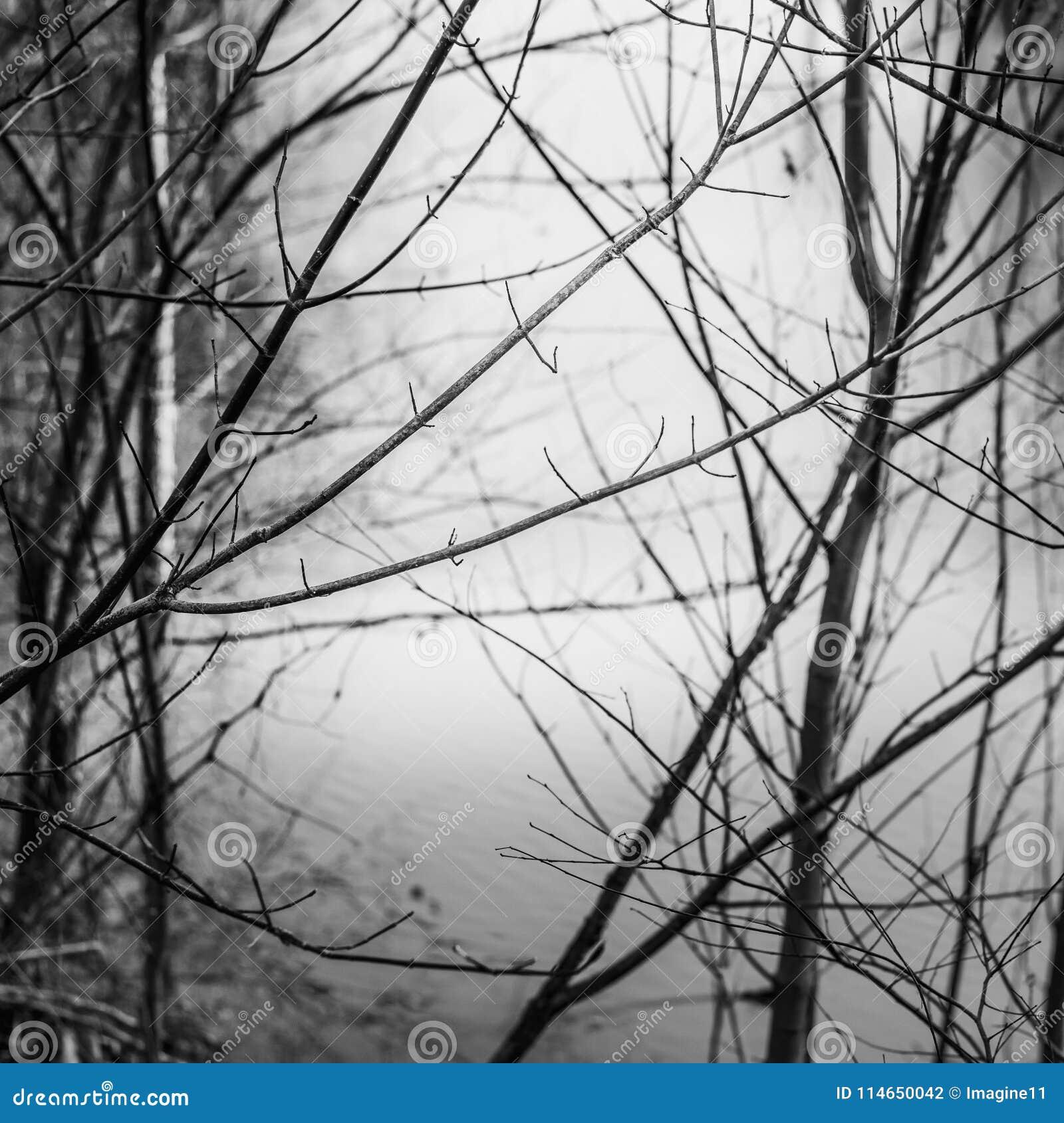 Κλάδοι δέντρων ενάντια στο ομαλό νερό