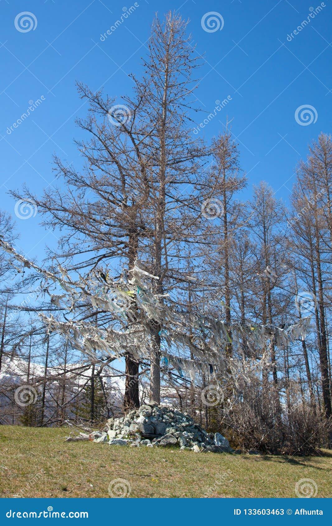 Κλάδος ενός δέντρου